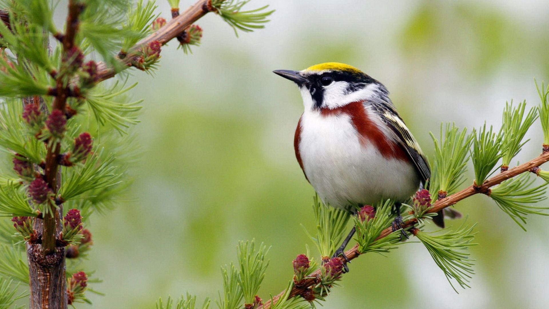Bird On Branch Photos