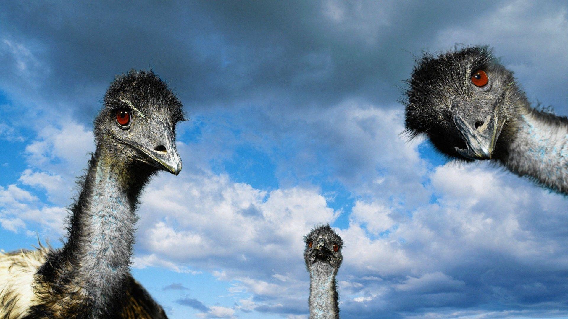 Bird Ostrich