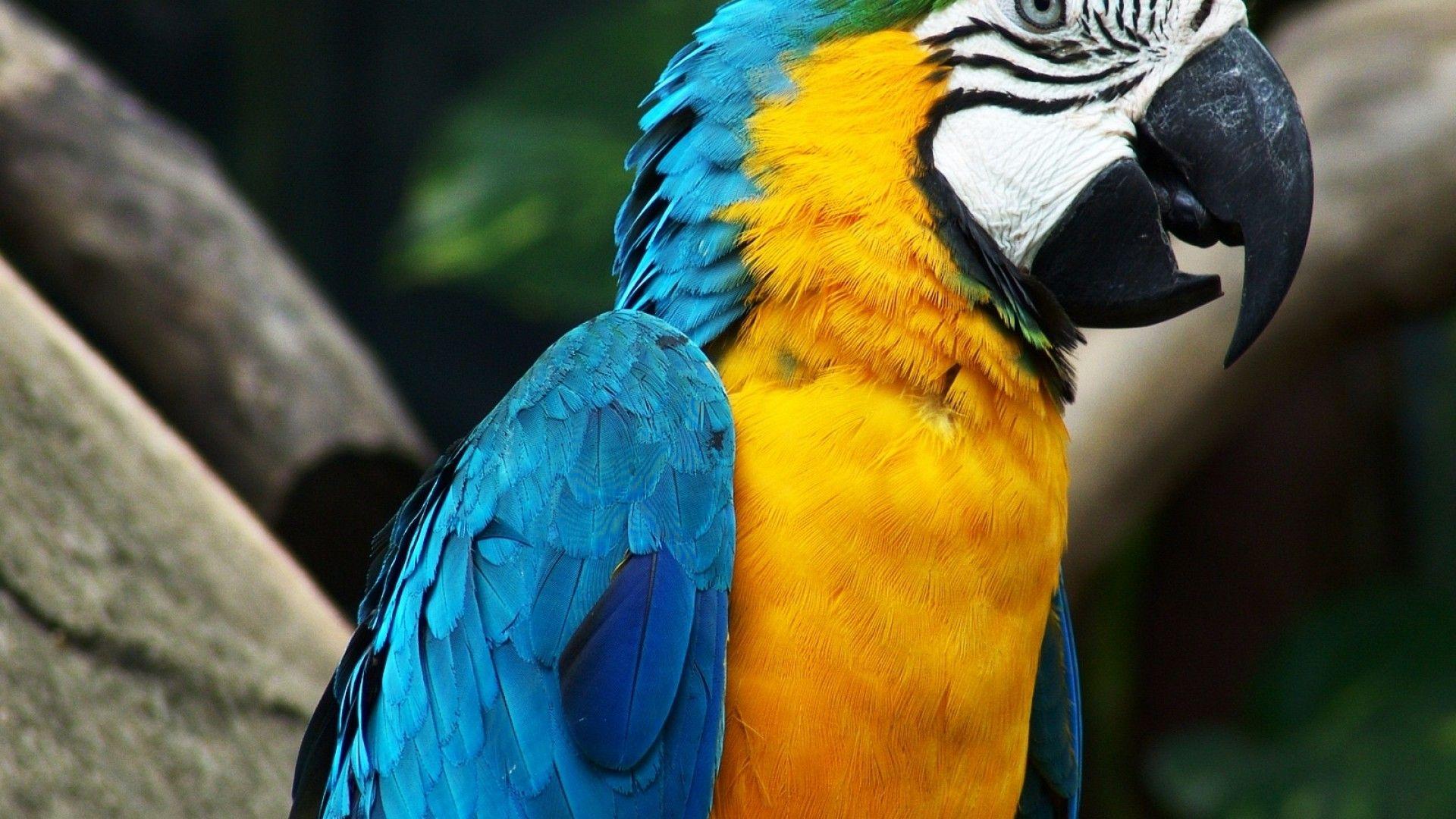 Birds Parrots Macaw