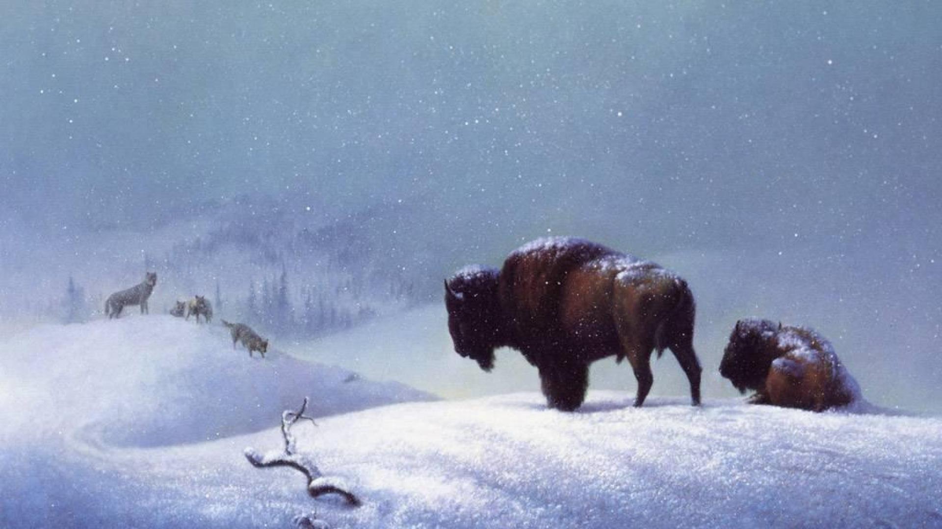 Bison Winter Landscape