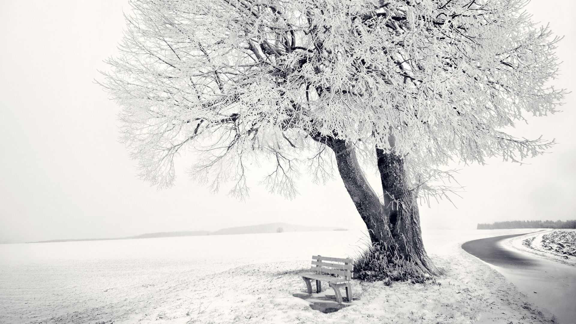 Black And White Photo Of Snow On Trees
