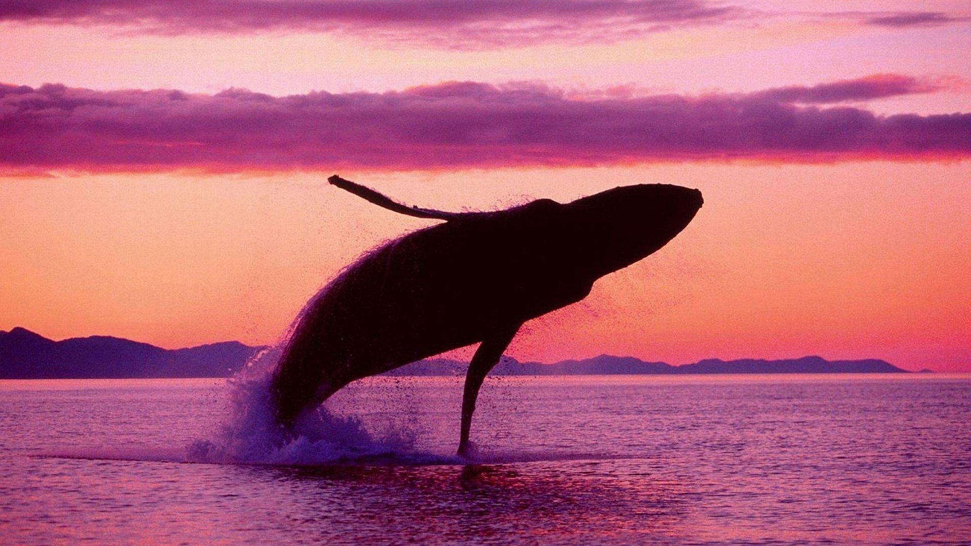 Blue Whale Pictures Beautiful