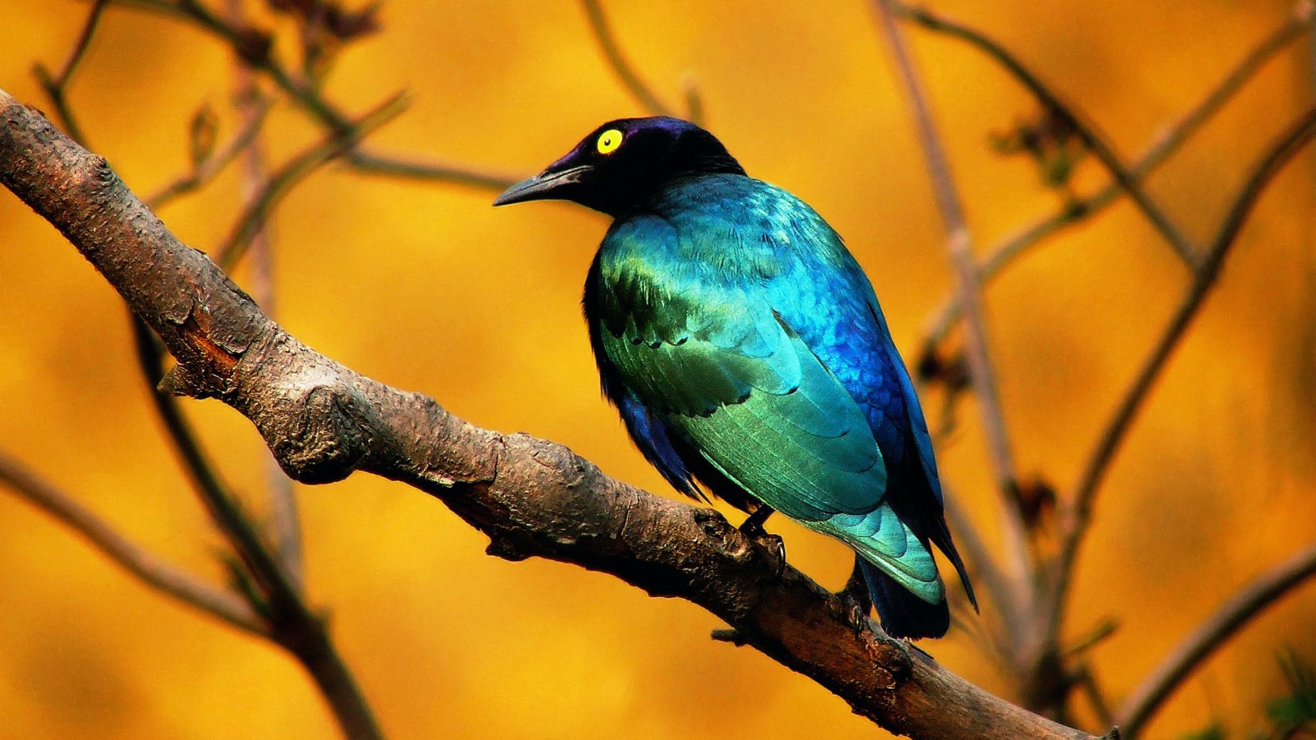 Bright Birds Picture