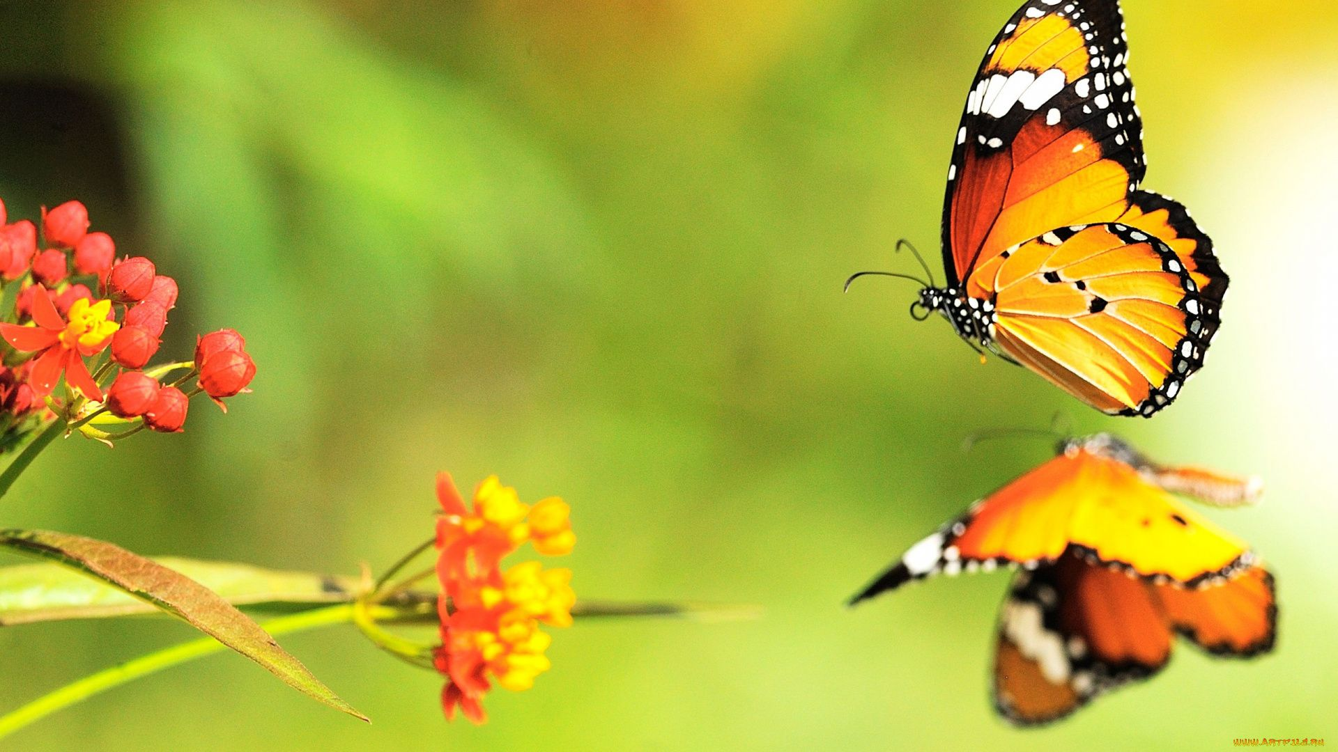 Bright Butterfly Pictures
