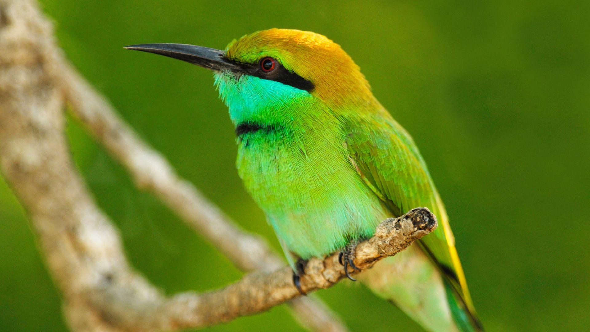 Bright Exotic Birds