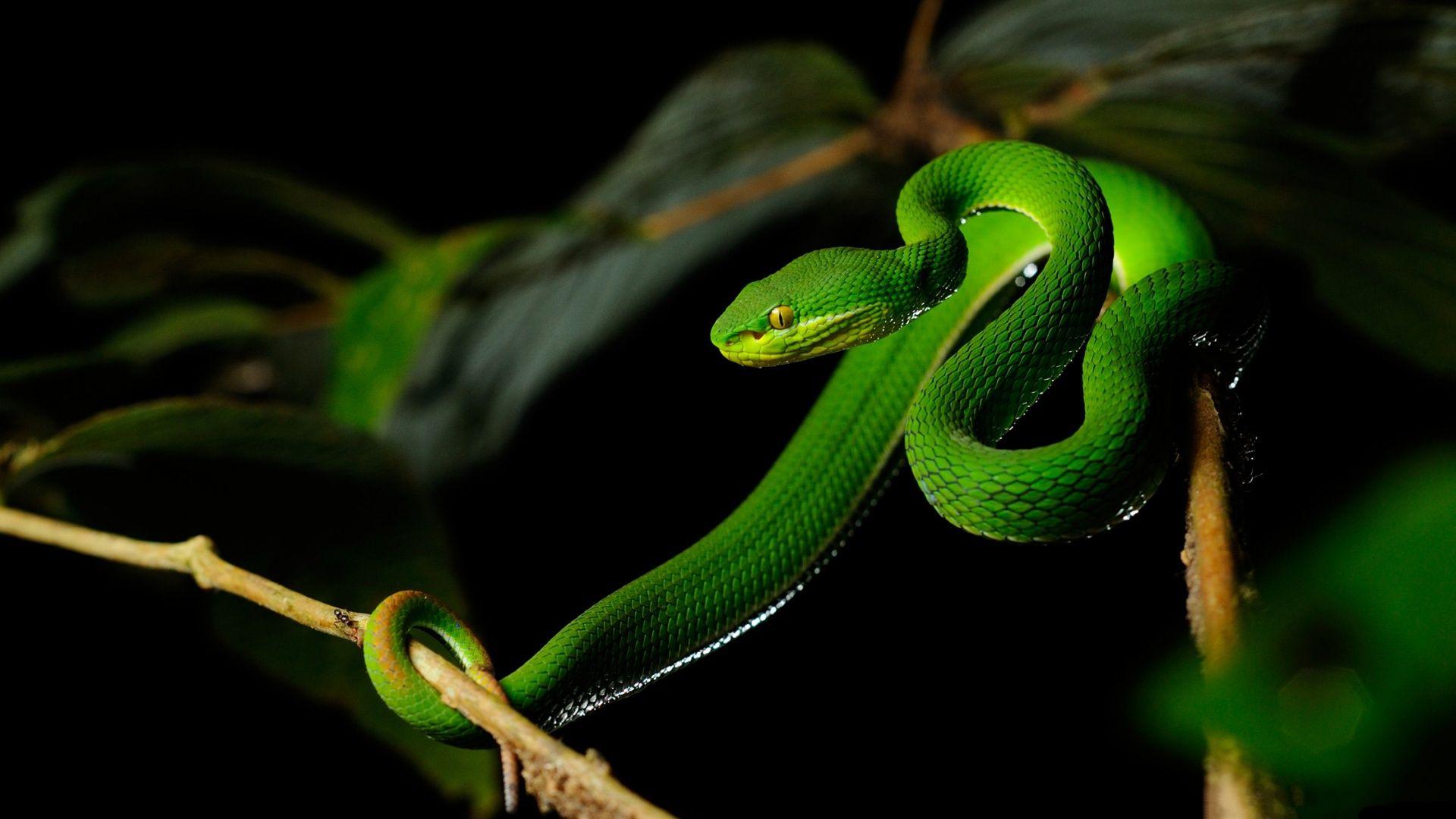 Bright Green Snake