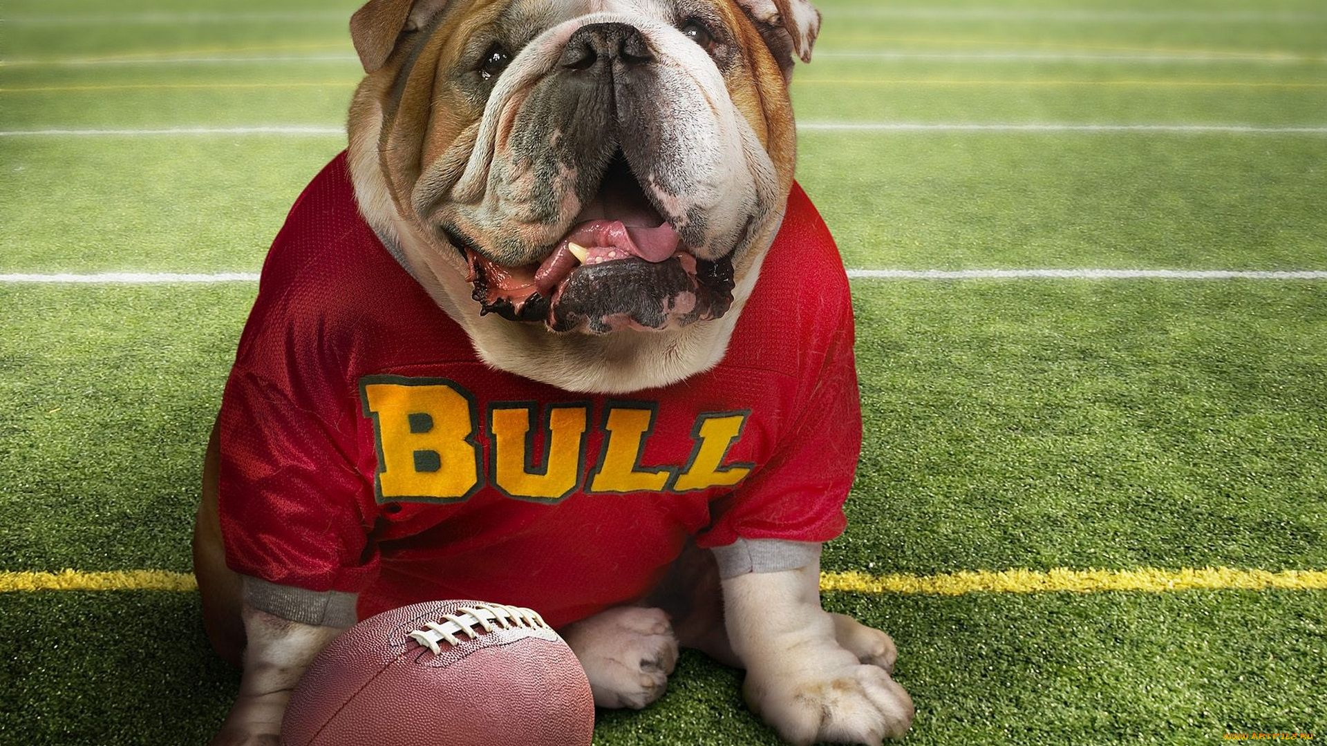 Bulldog With A Ball