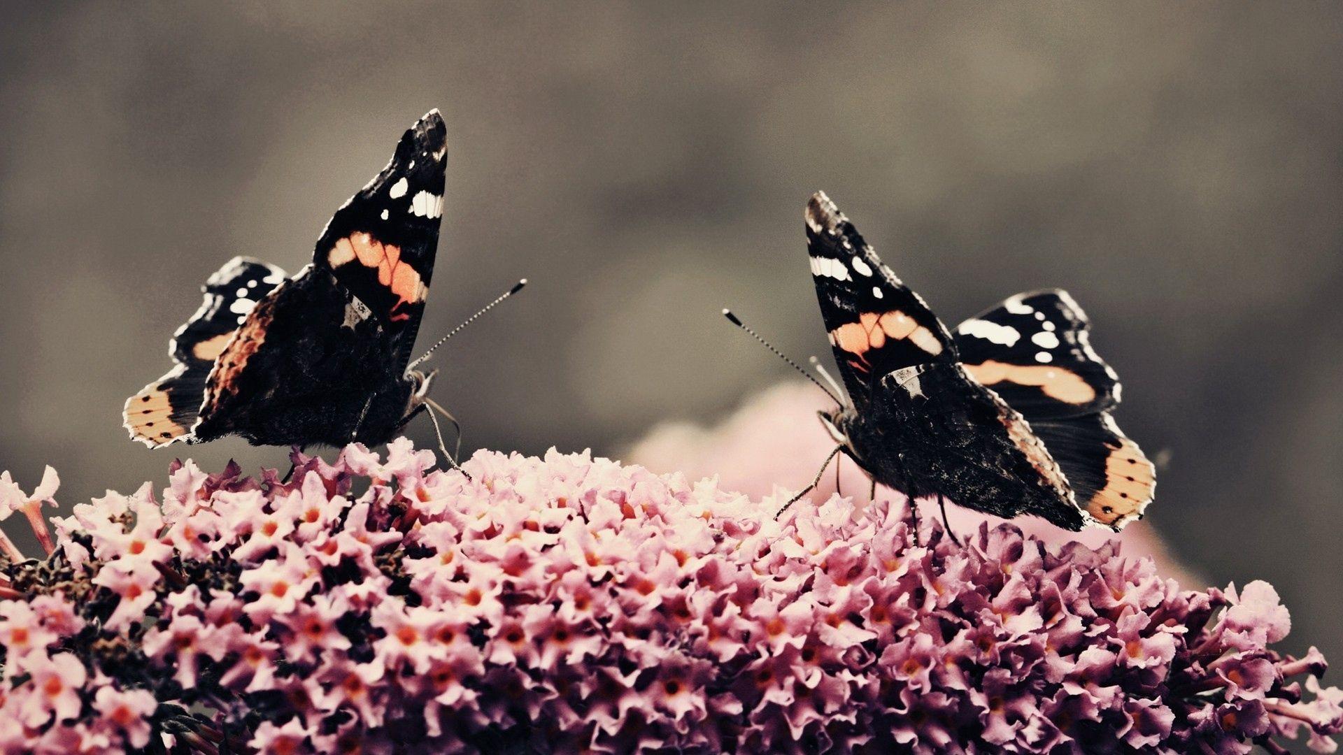 Butterfly Photo Beautiful Lot