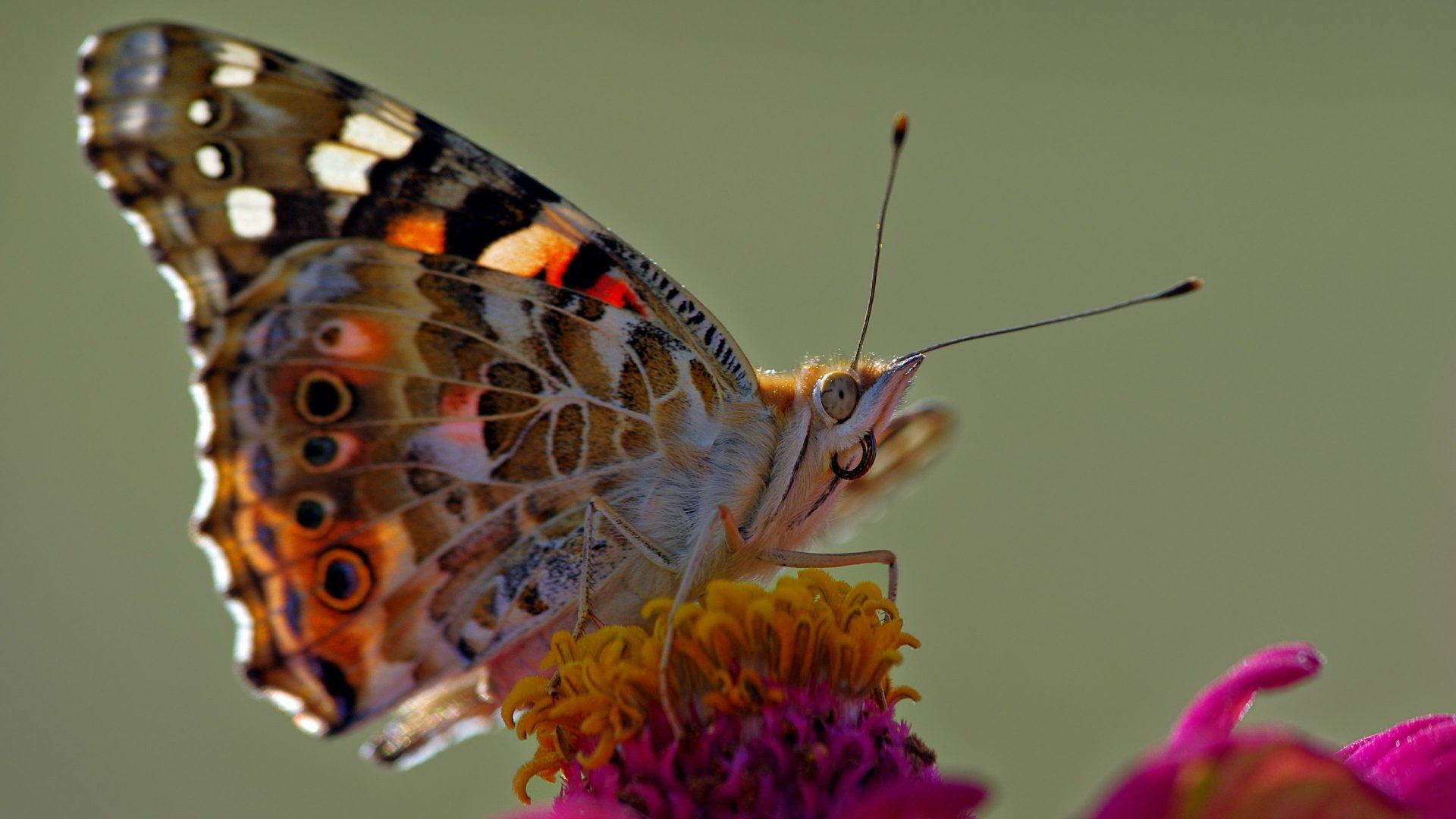 Butterfly Photo Is Beautiful