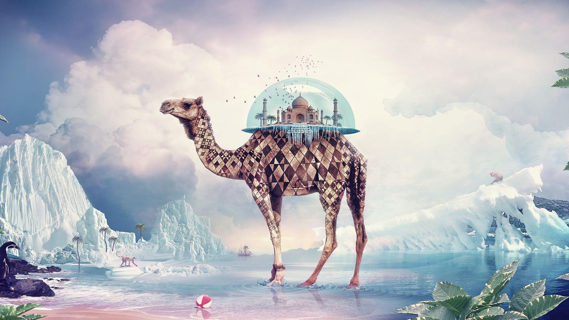 Camel Wallpapers For Your Desktop
