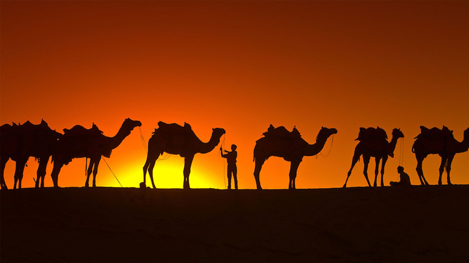 Camels Background