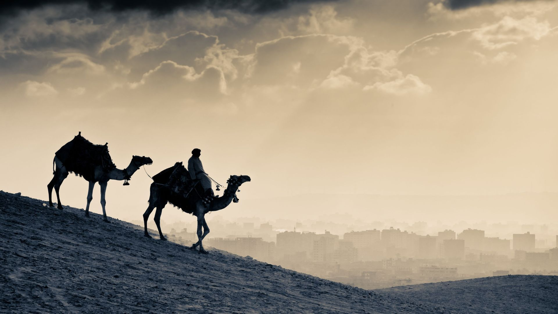 Camels In The Desert Sunset