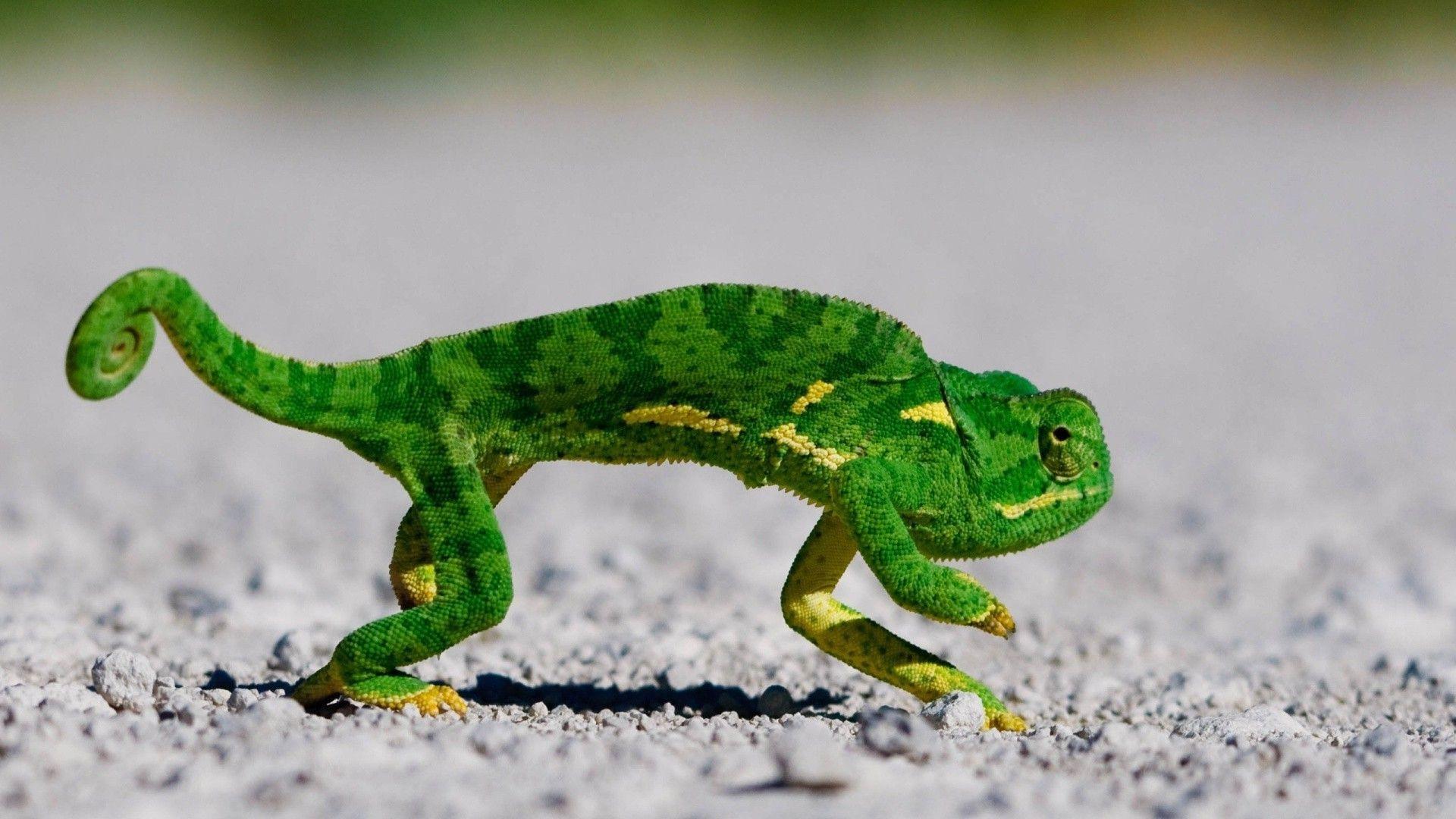 Chameleon Green Figure