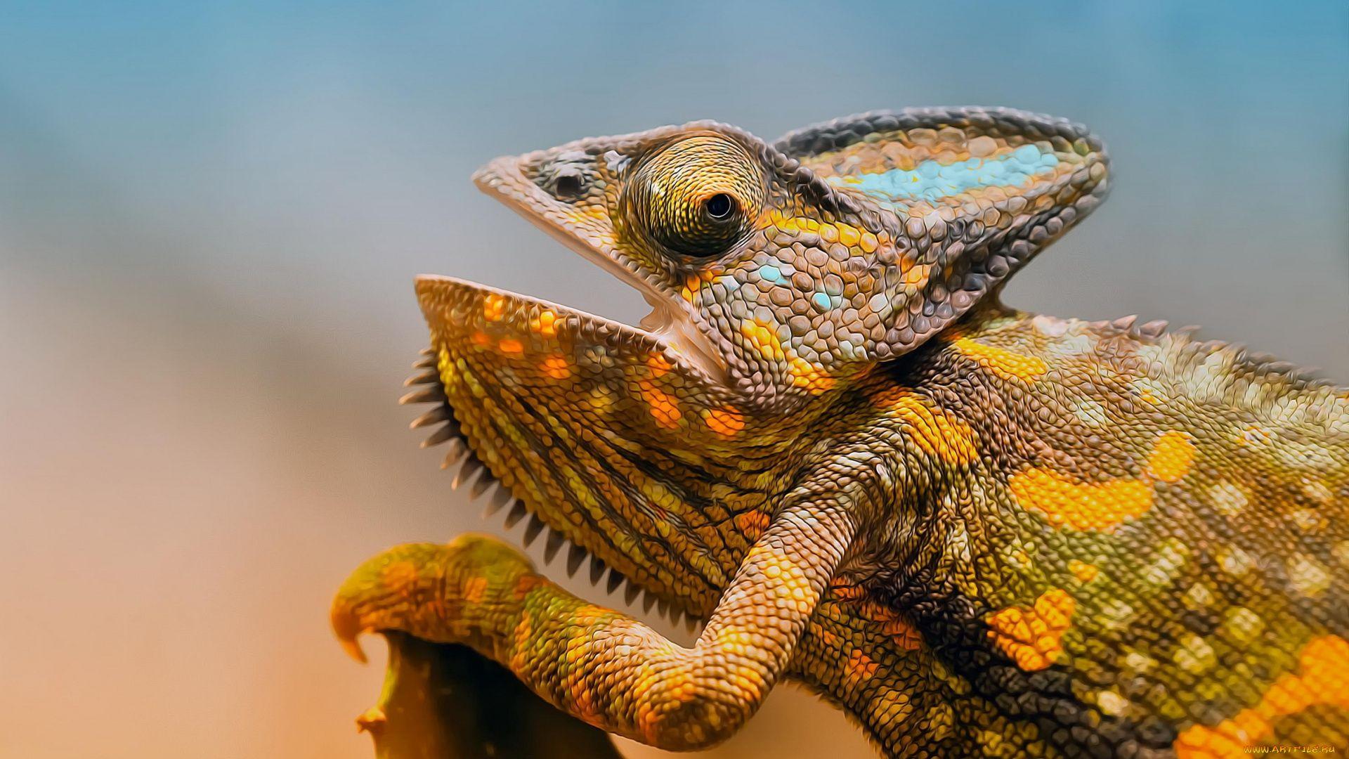 Chameleon Lizard Eyes