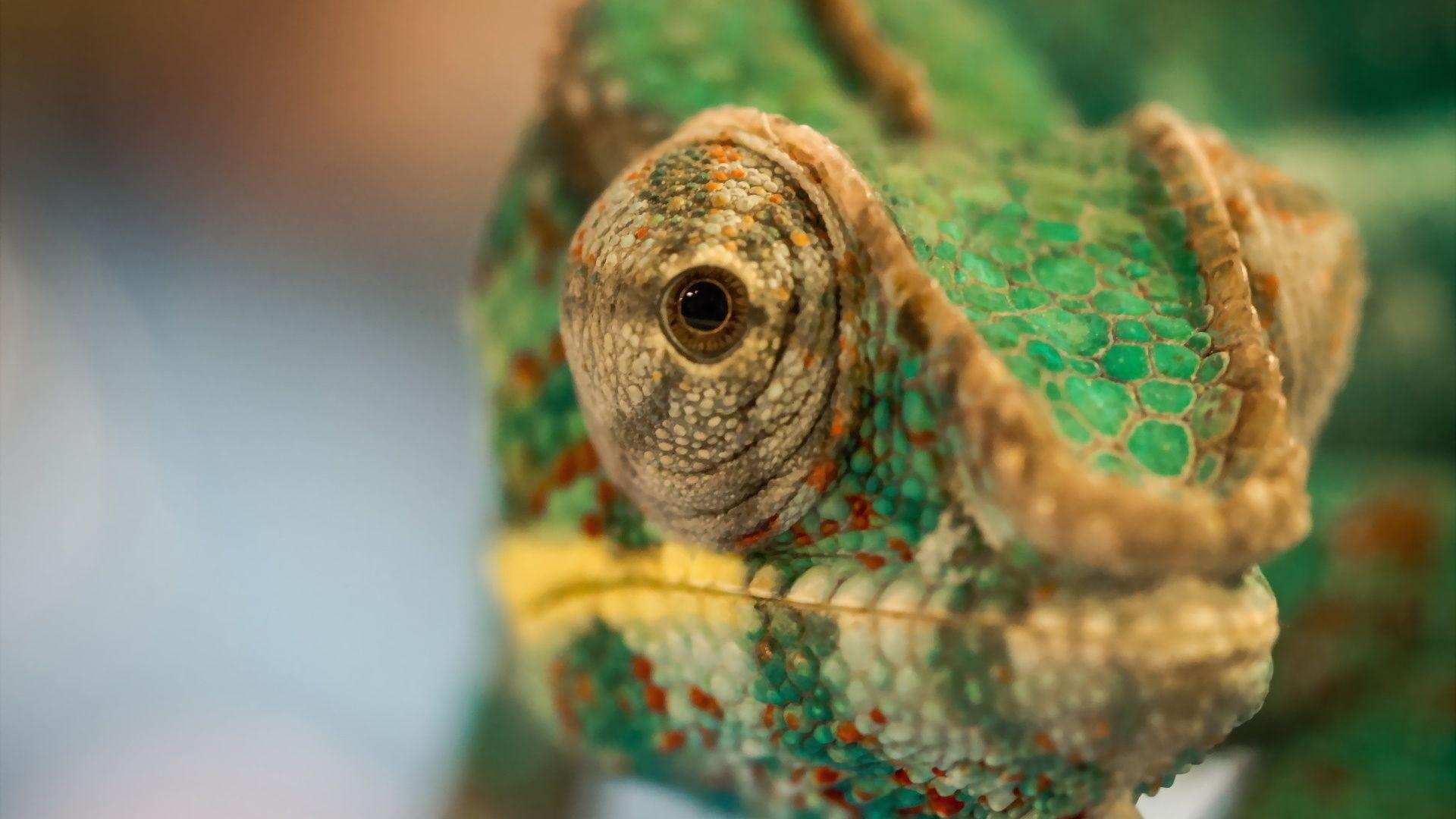 Chameleon Macro
