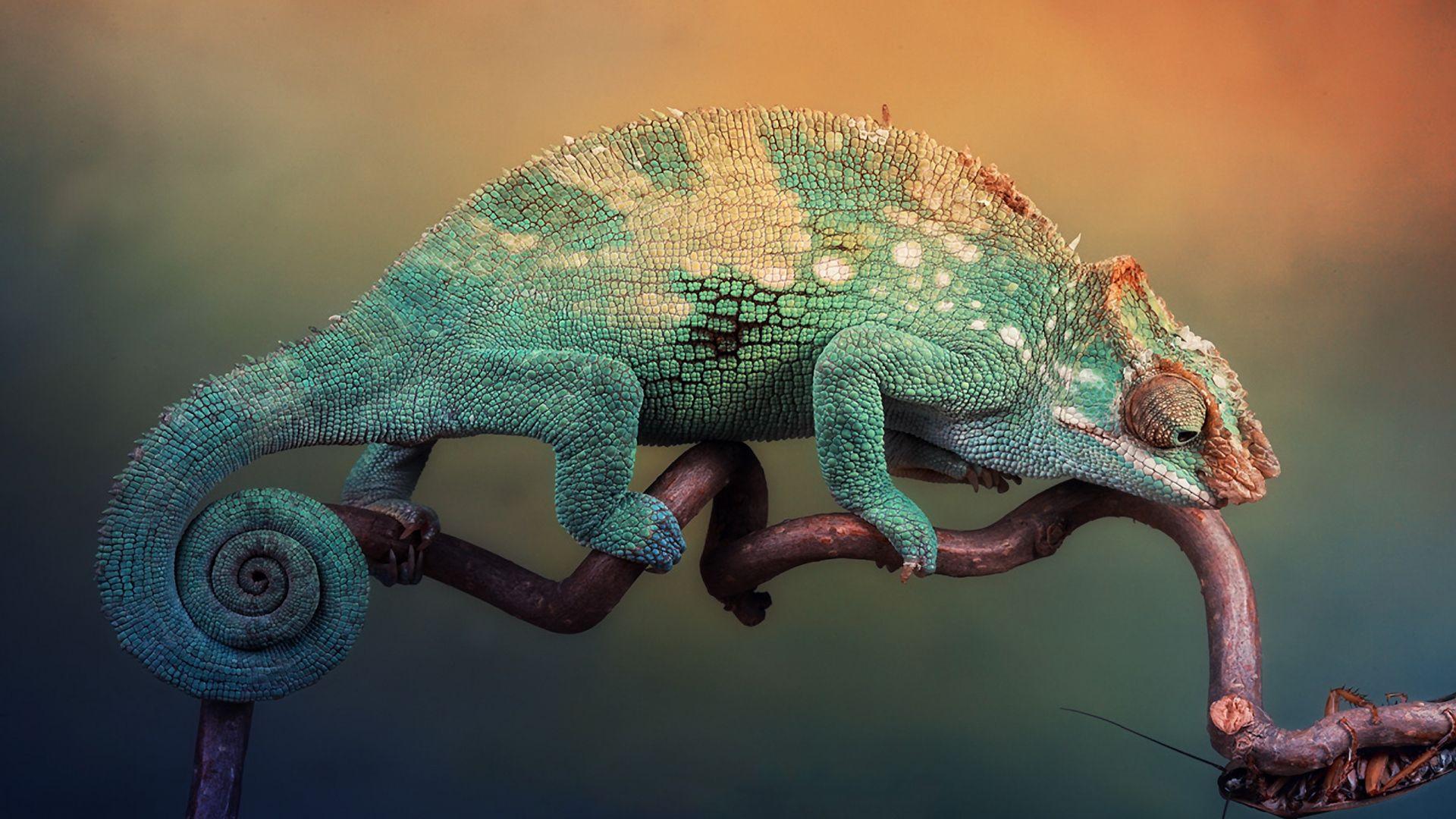 Chameleon Pictures