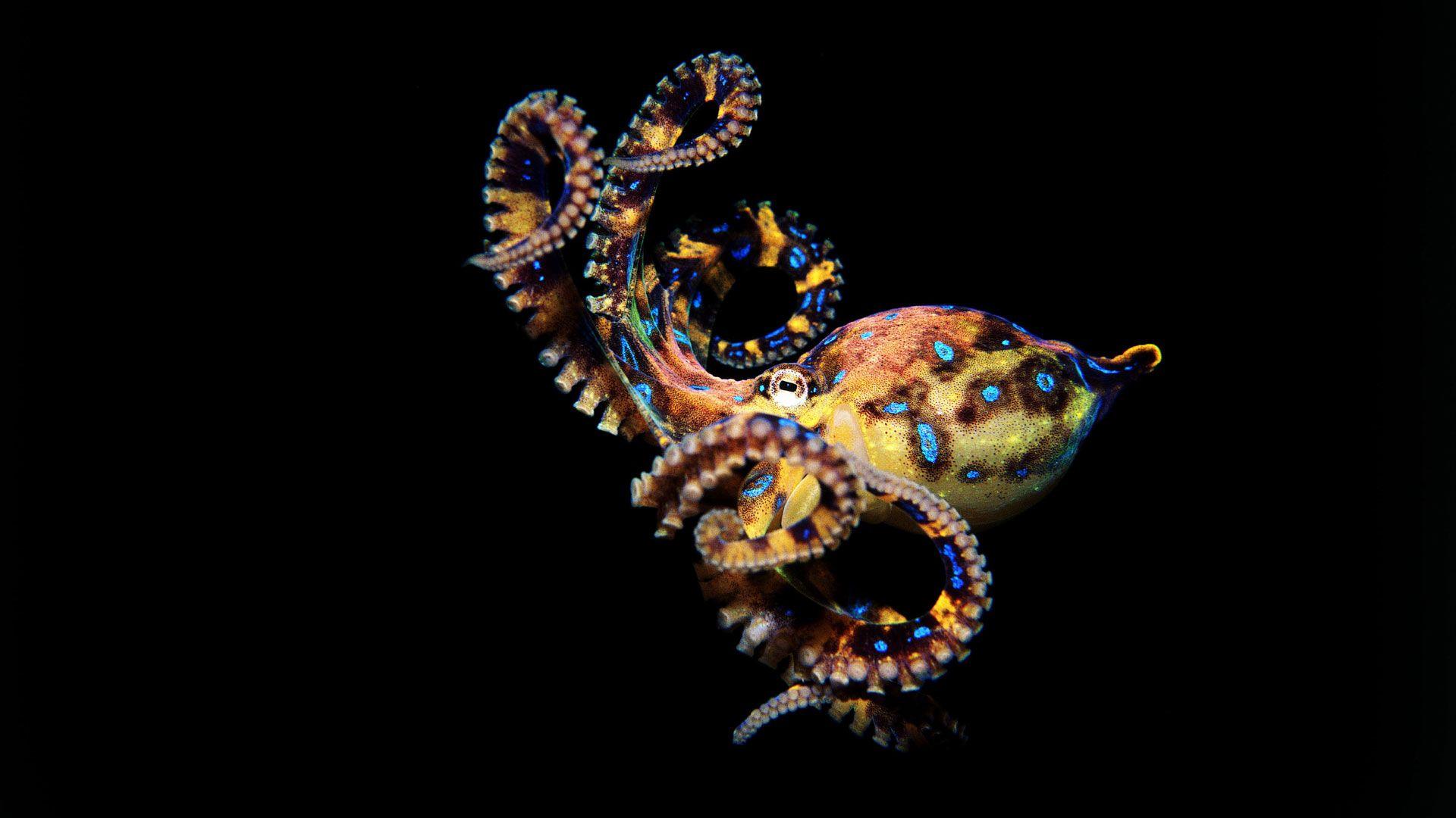 Cinacalcet Octopus