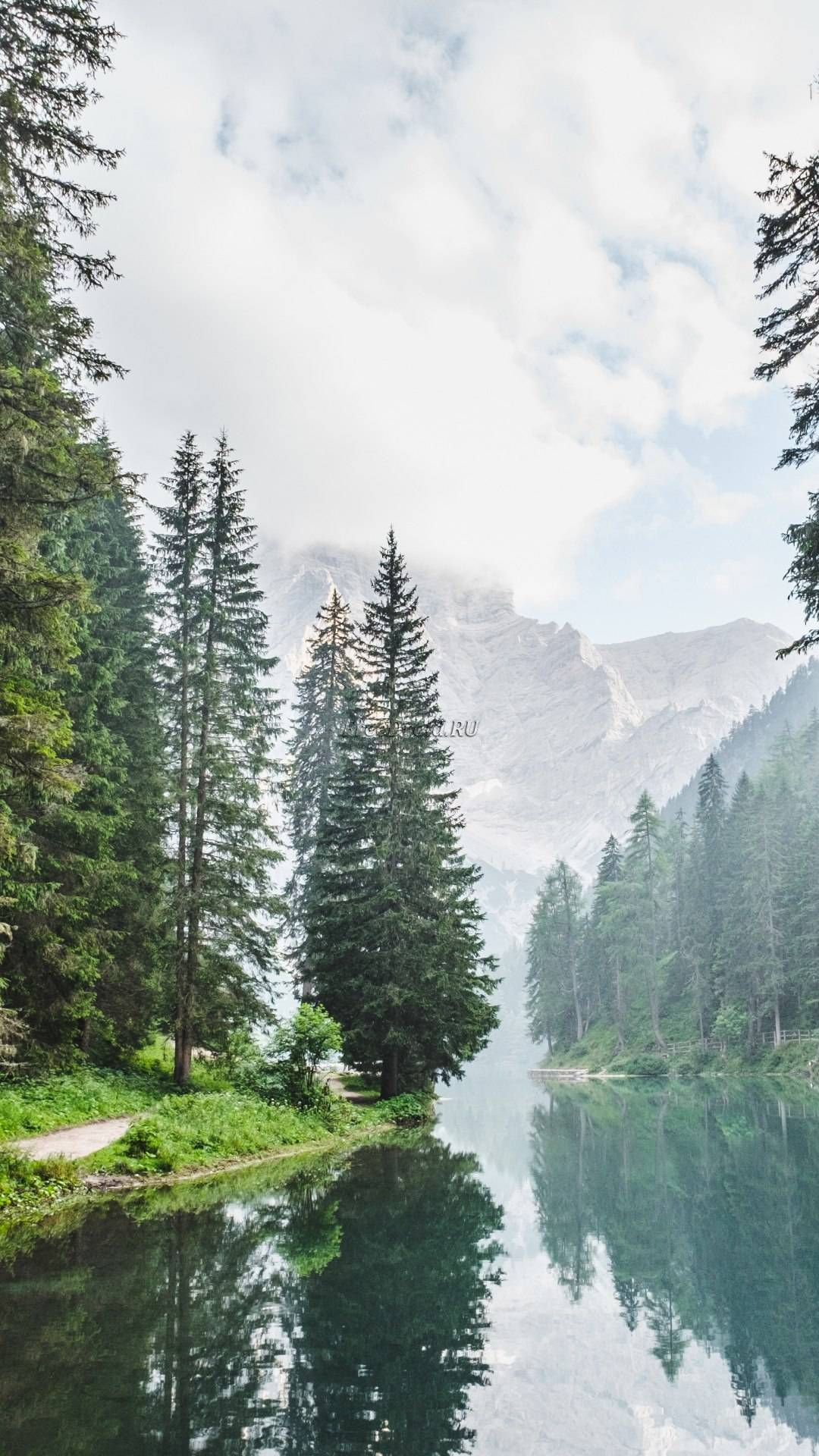 Coniferous Forest Mountain Lake