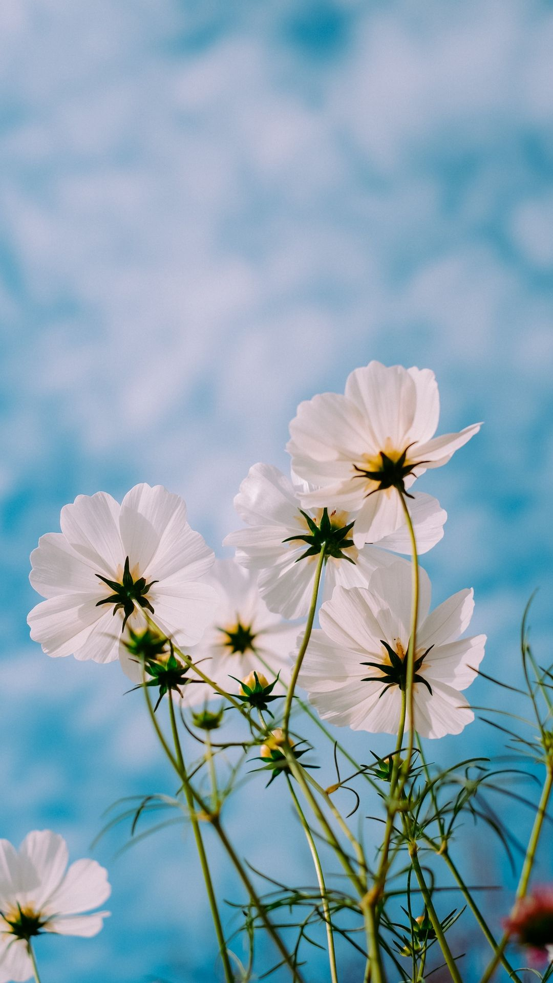 Cosmos And Sky