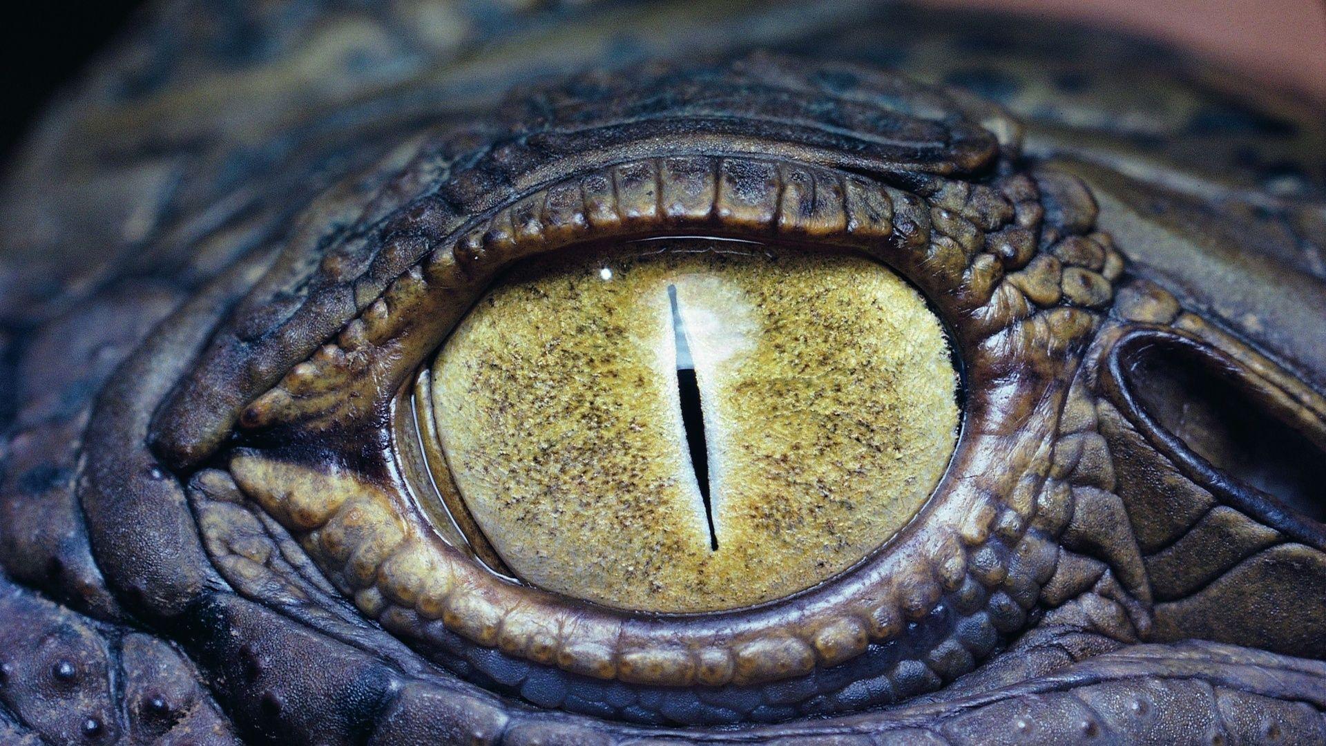 Crocodile Eye Color
