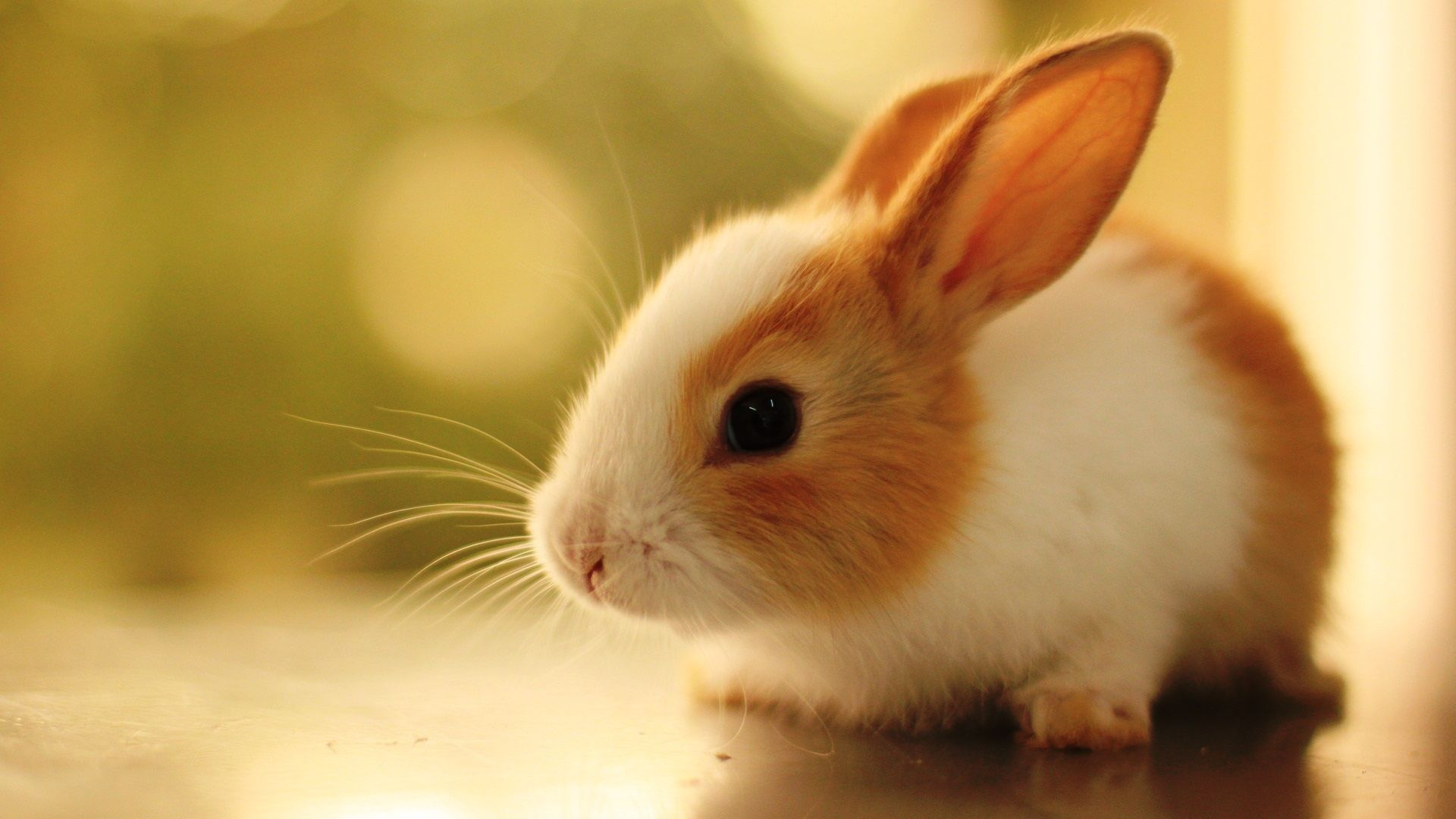 Cute Bunnies Pictures