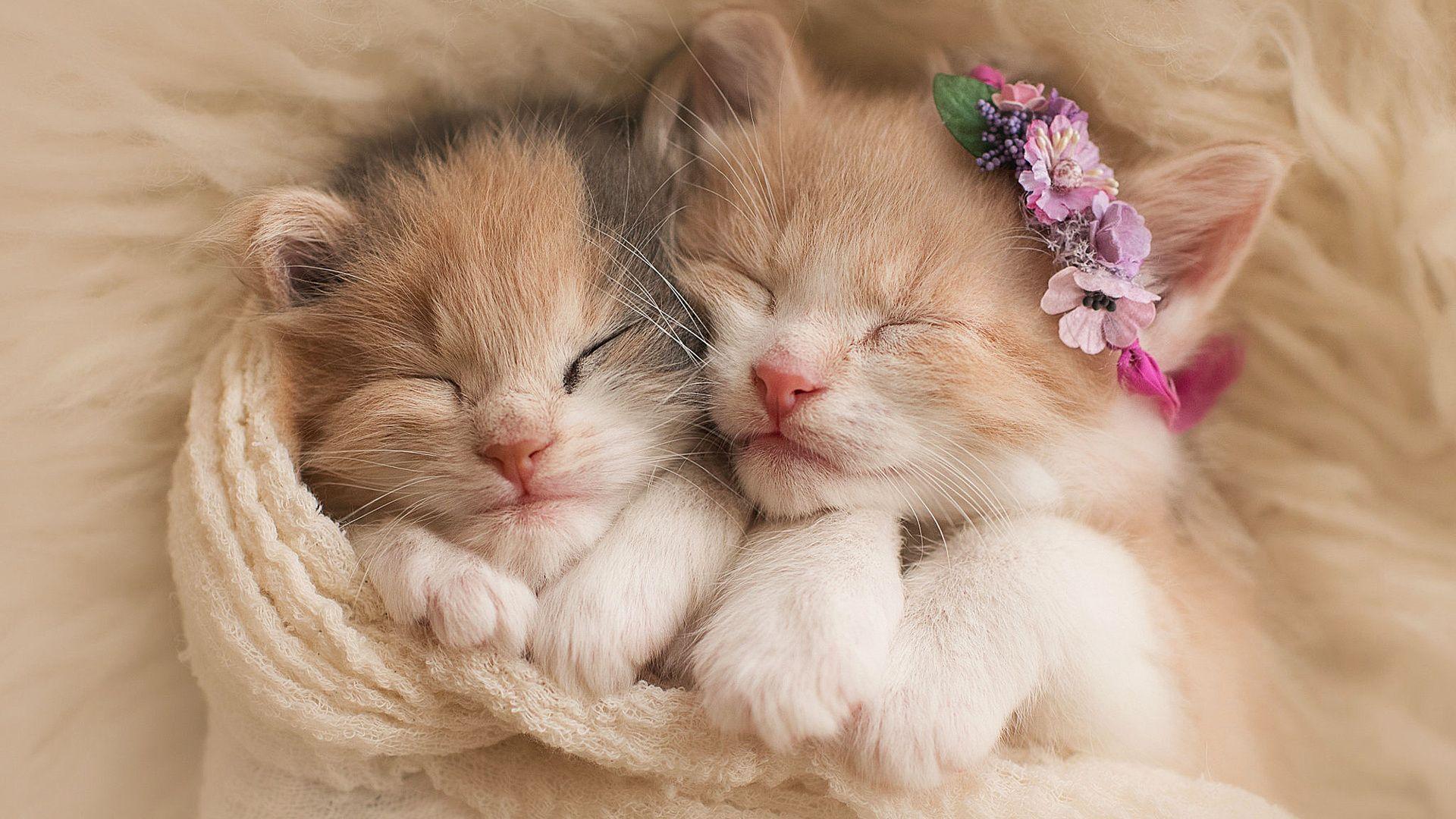Cute Kittens Photo