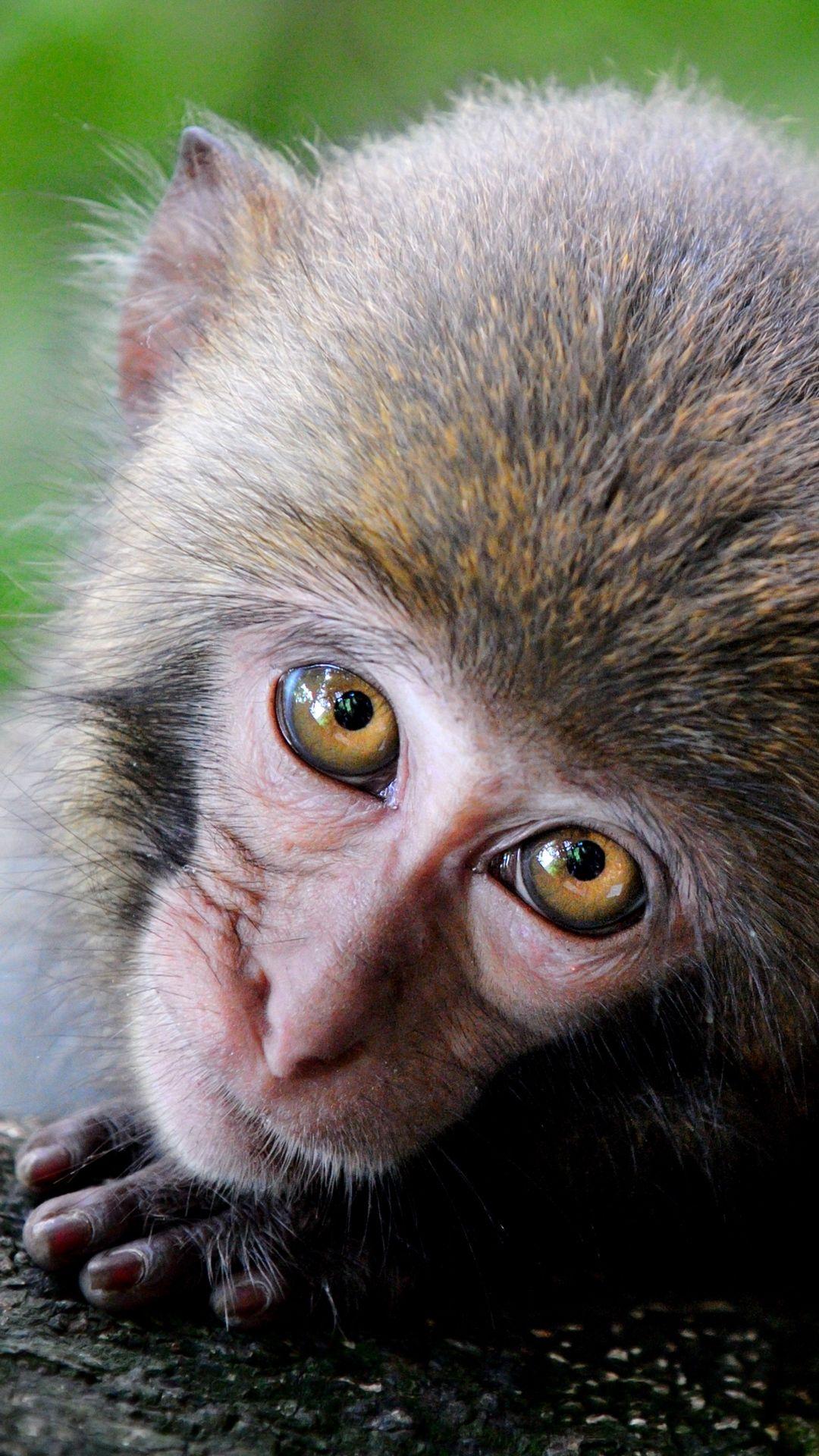 Cute Monkey Photo