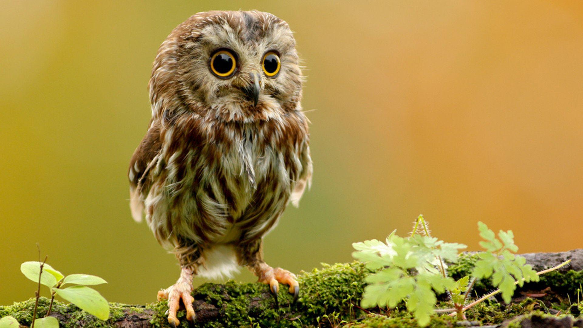 Cute Owls Photos