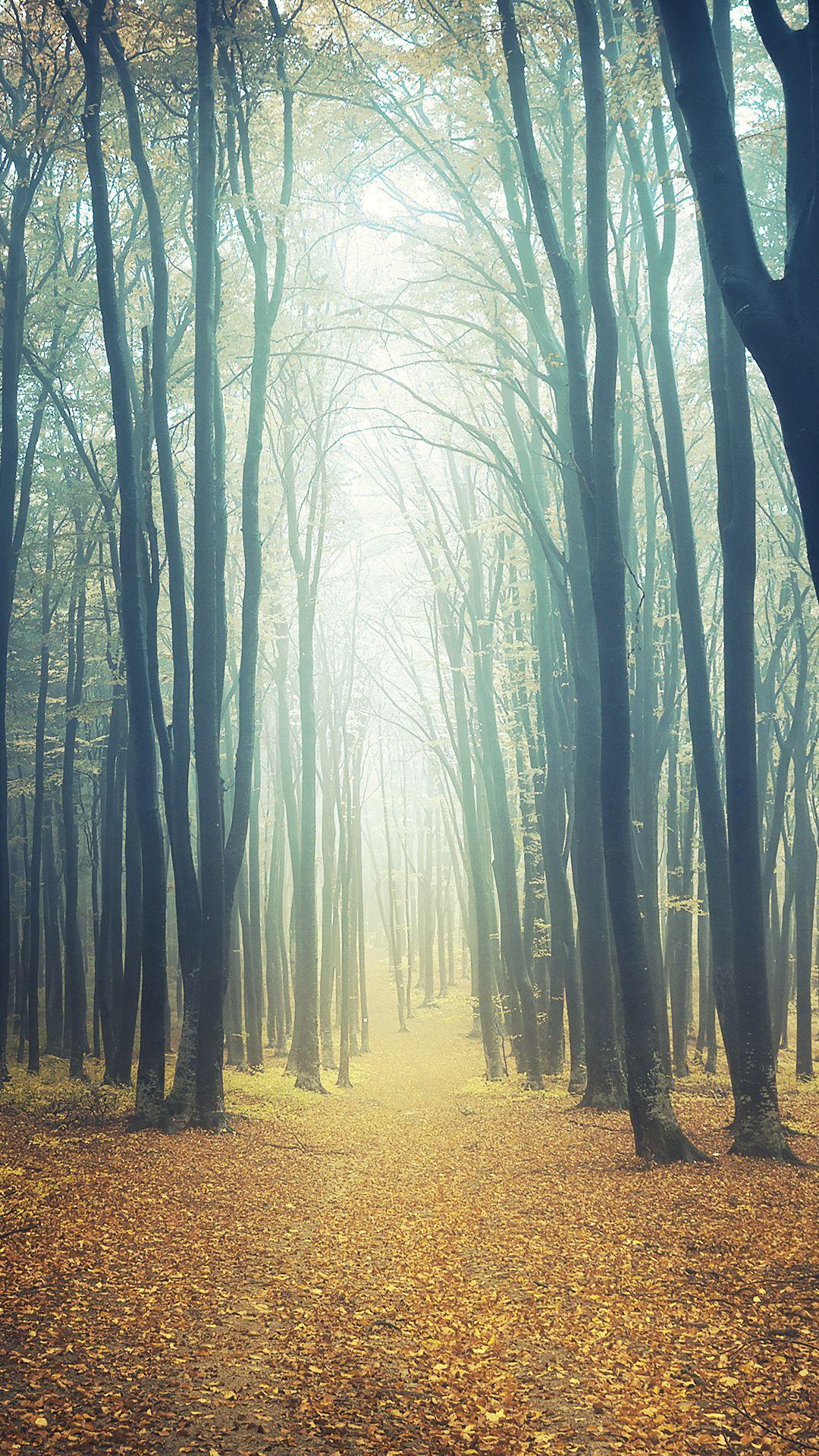 Dark Forest In The Fog