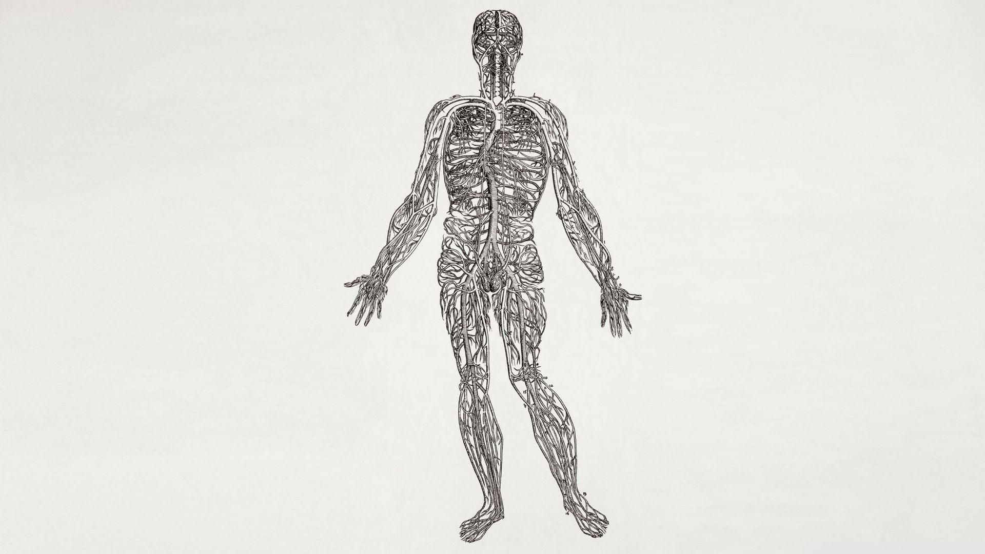 De Humani Corpori Fabrica The Structure Of The Human Body Andreas Vesalius