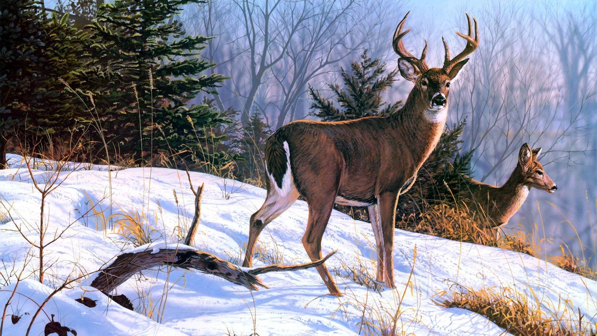 Deer Winter Pictures