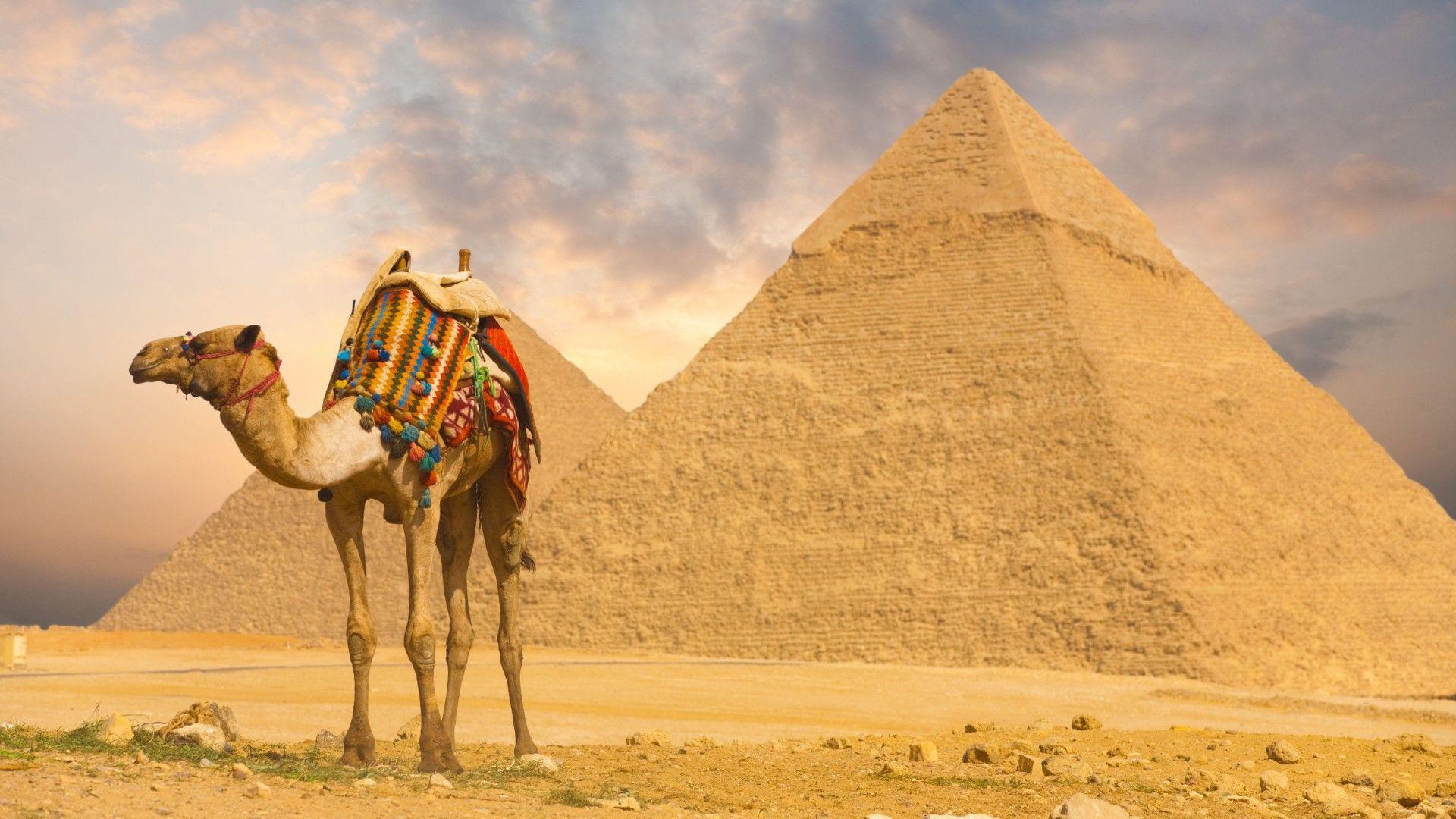 Desert Camel Pyramids