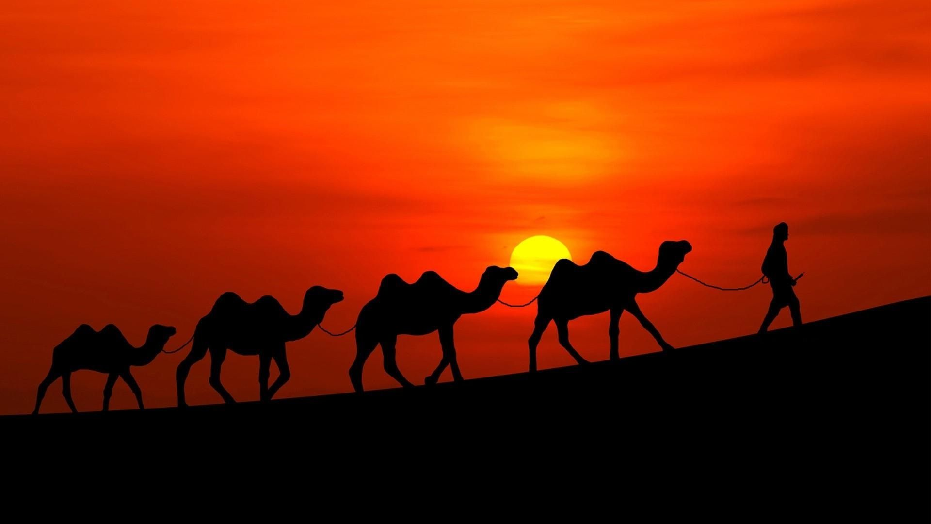 Desert Camels Caravan