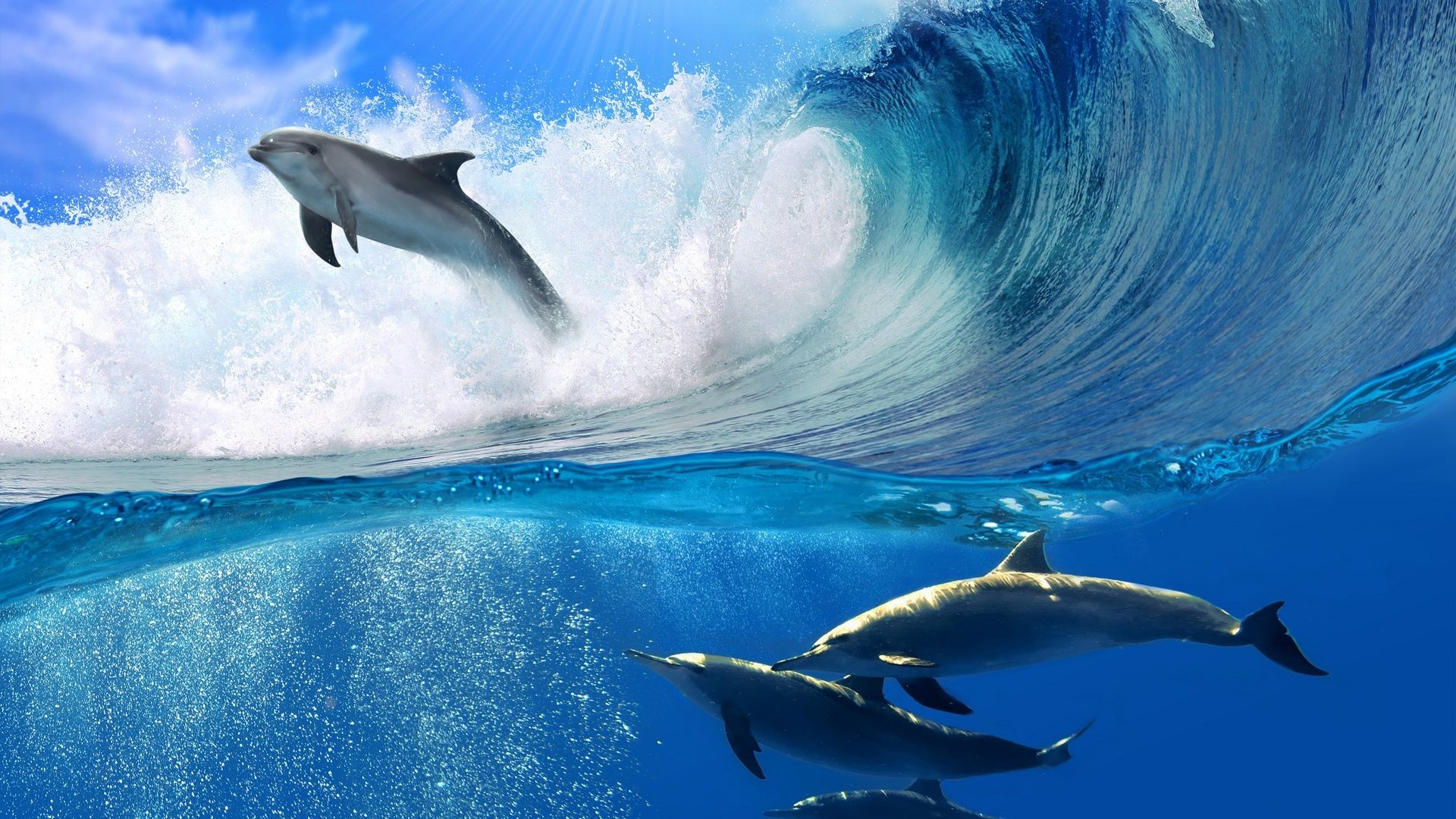 Dolphins In The Sea Images