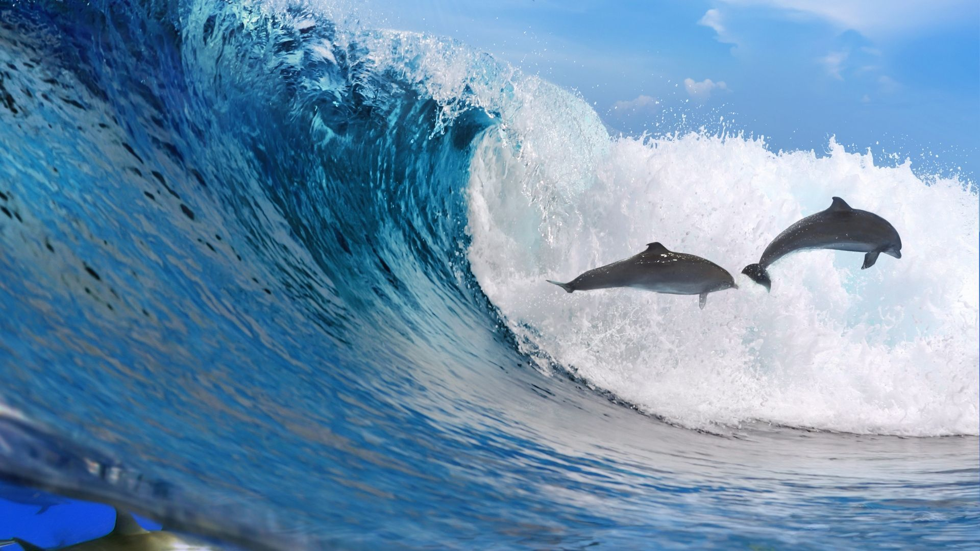 Dolphins In The Waves Of The Ocean