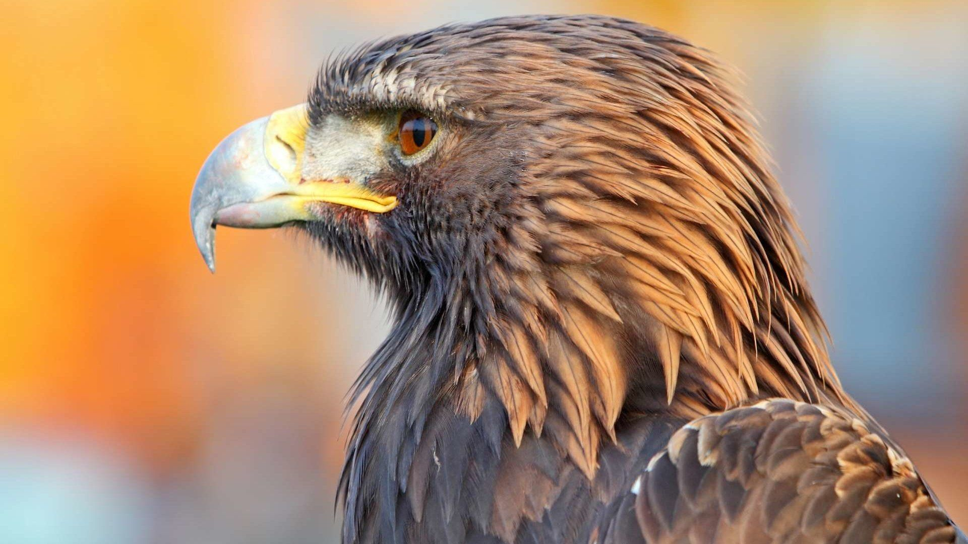 Eagle Bird Pictures