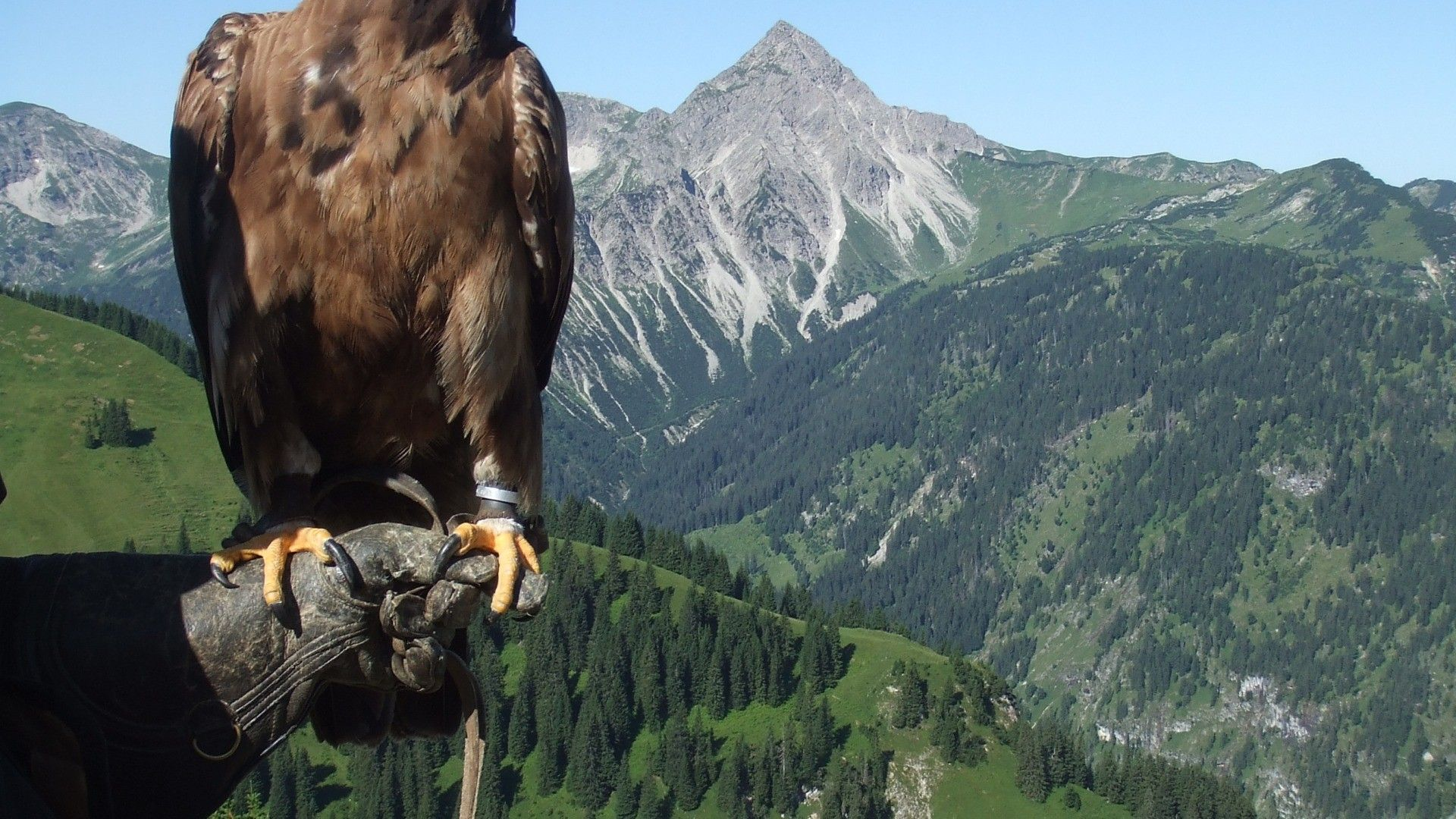 Eagle In The Mountains Photo