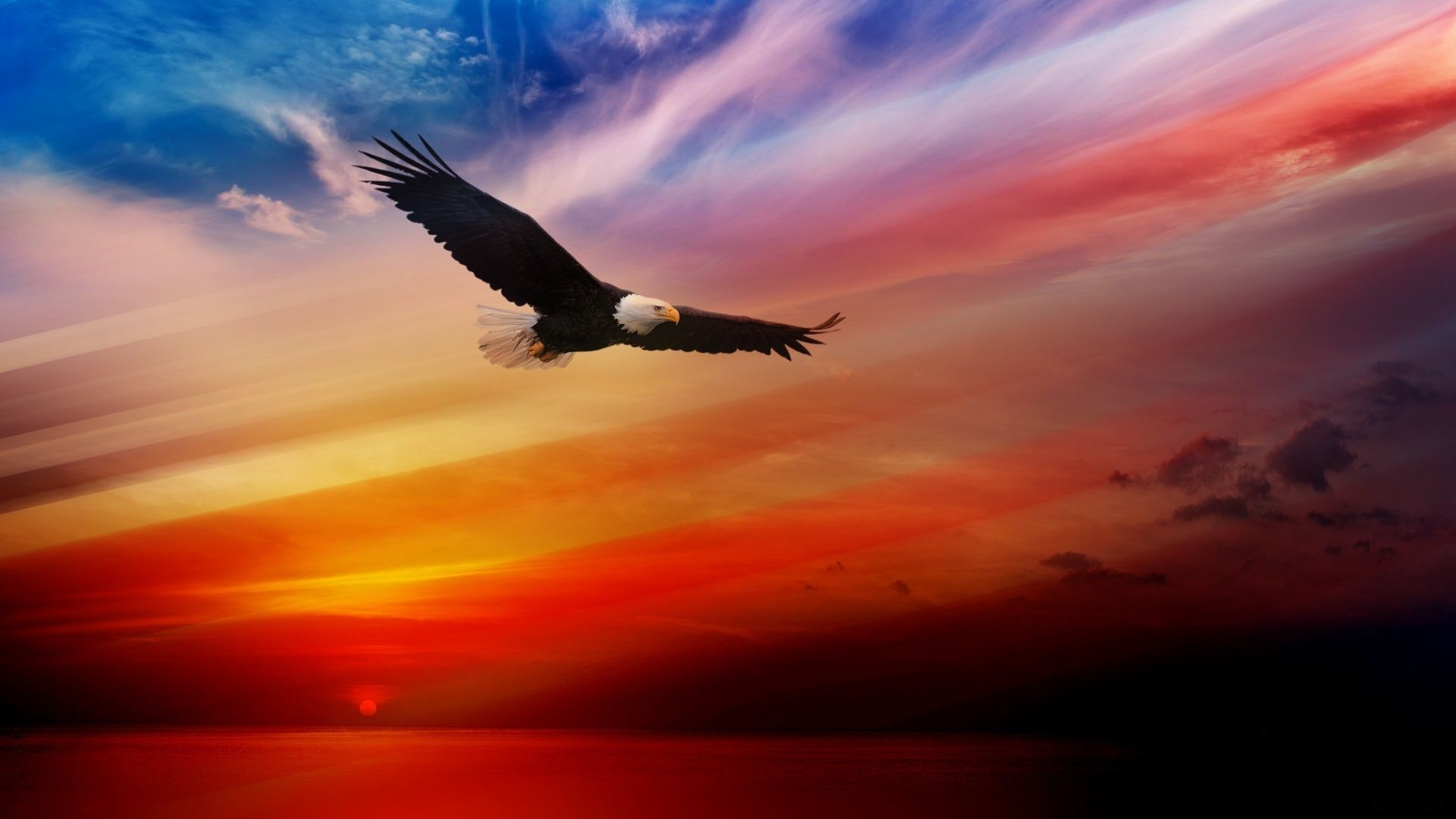 Eagle In The Sky Photos