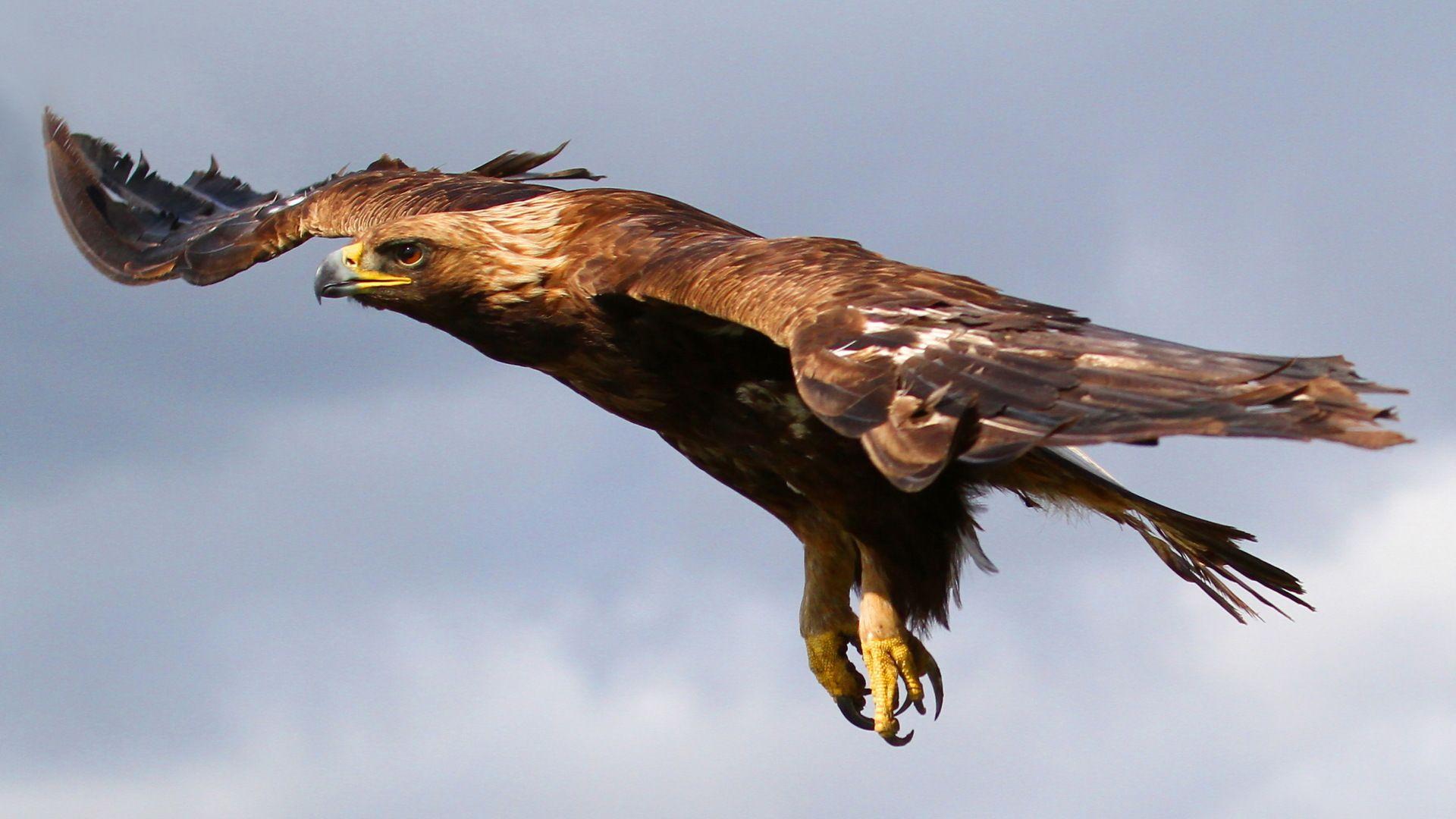 Eagle Photo Of Birds In Flight