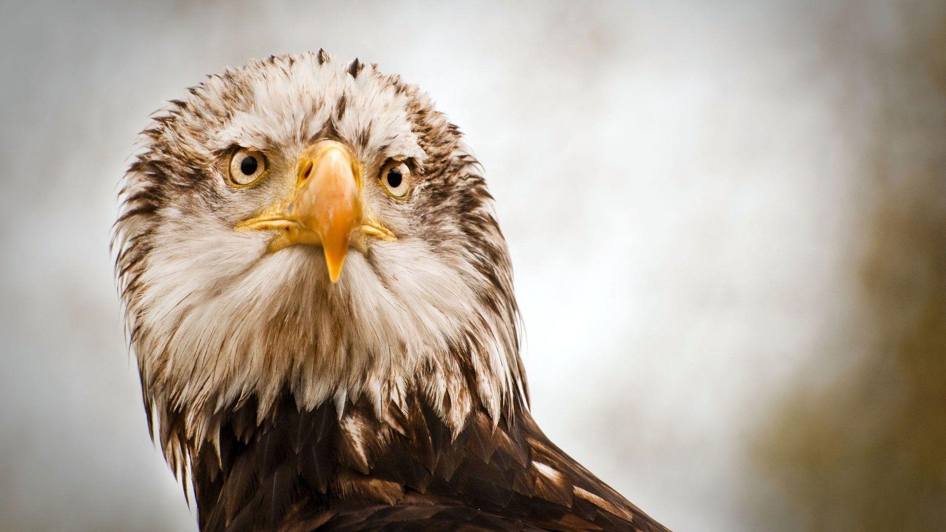 Eagle Photo Of Birds