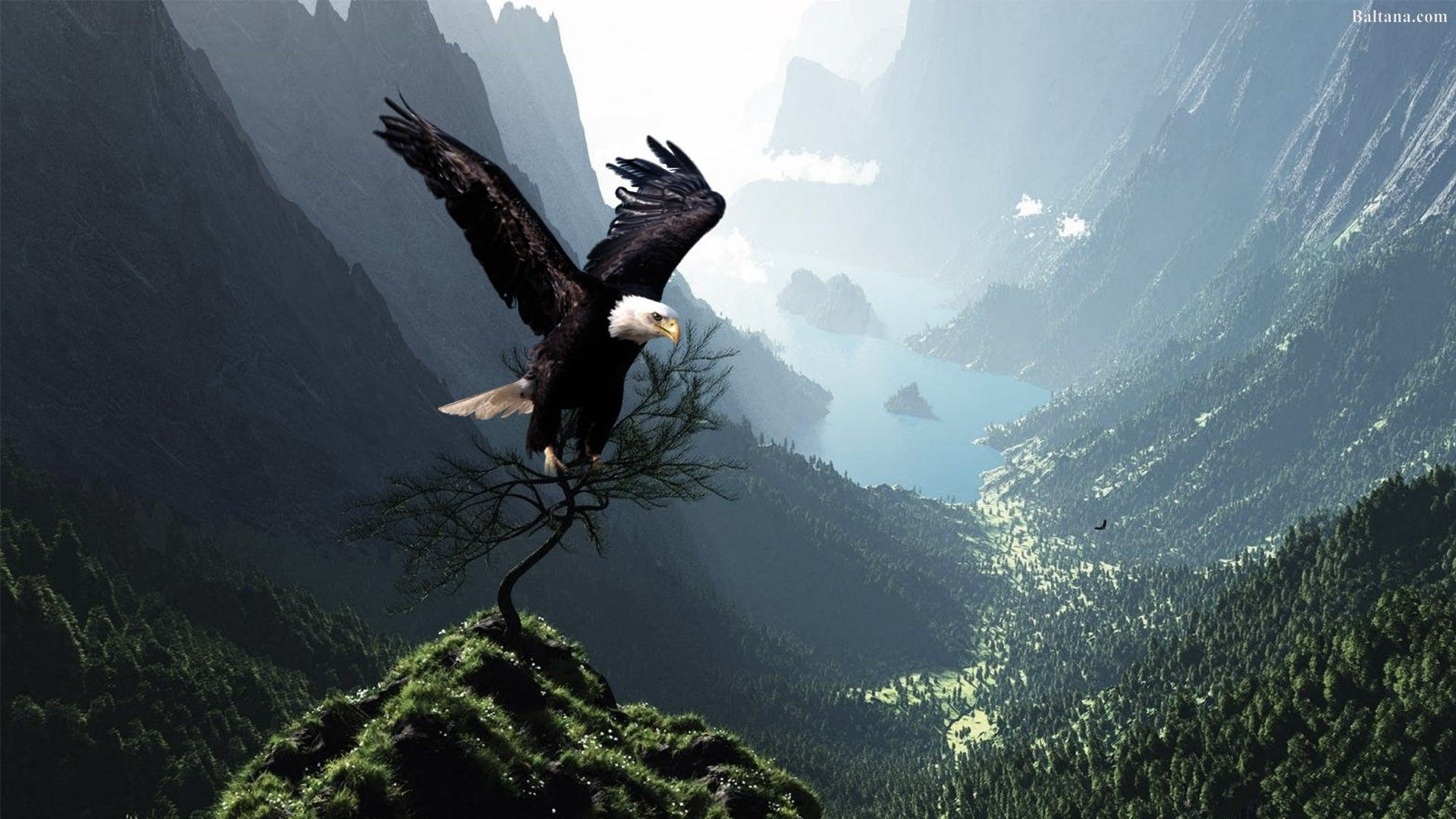 Eagle Pictures Wallpaper