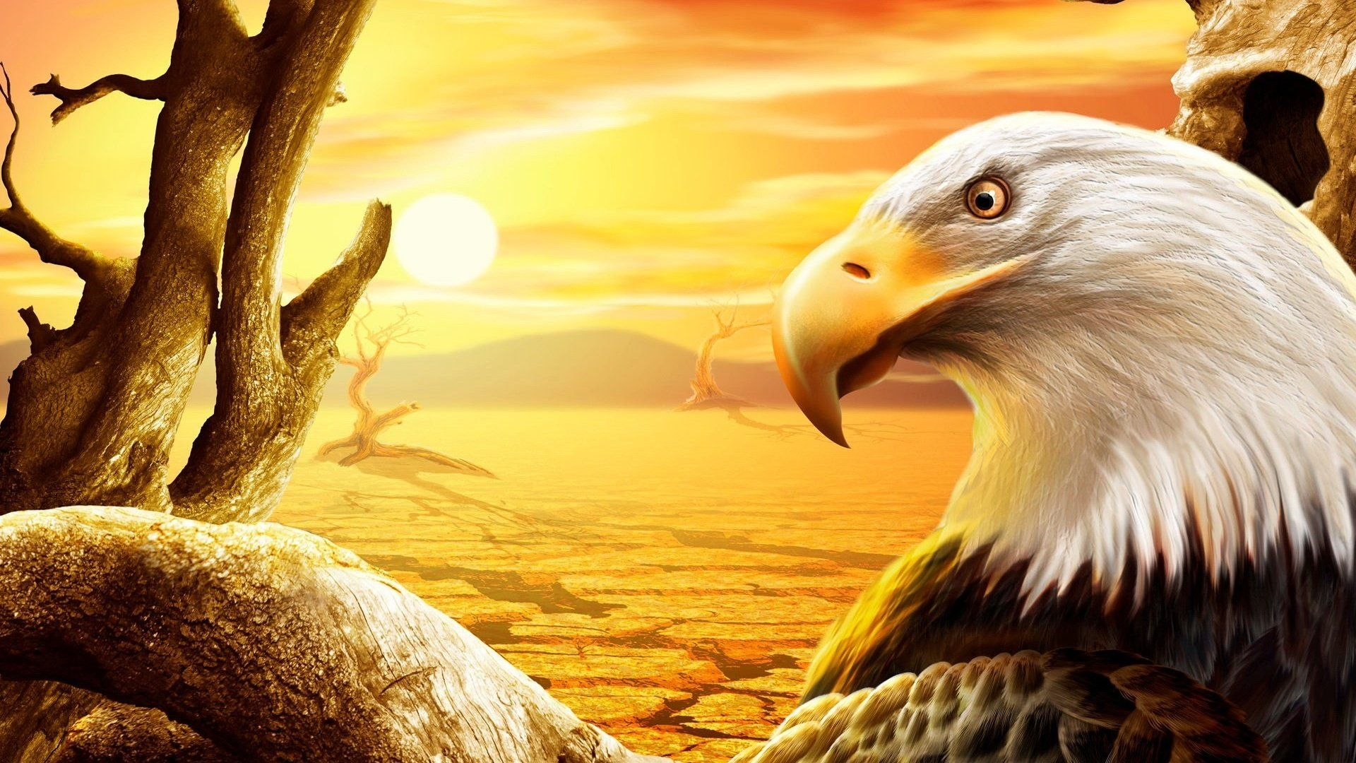 Eagle Pictures For Wallpaper 3d