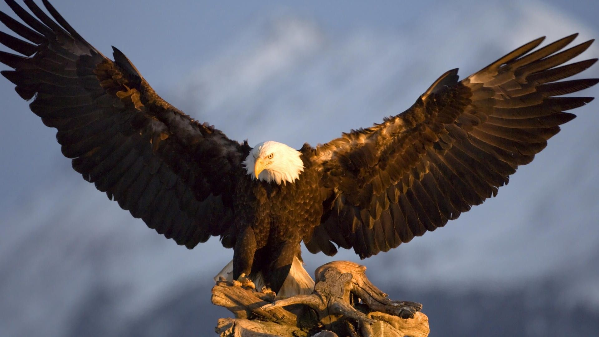 Eagles Wing Pictures