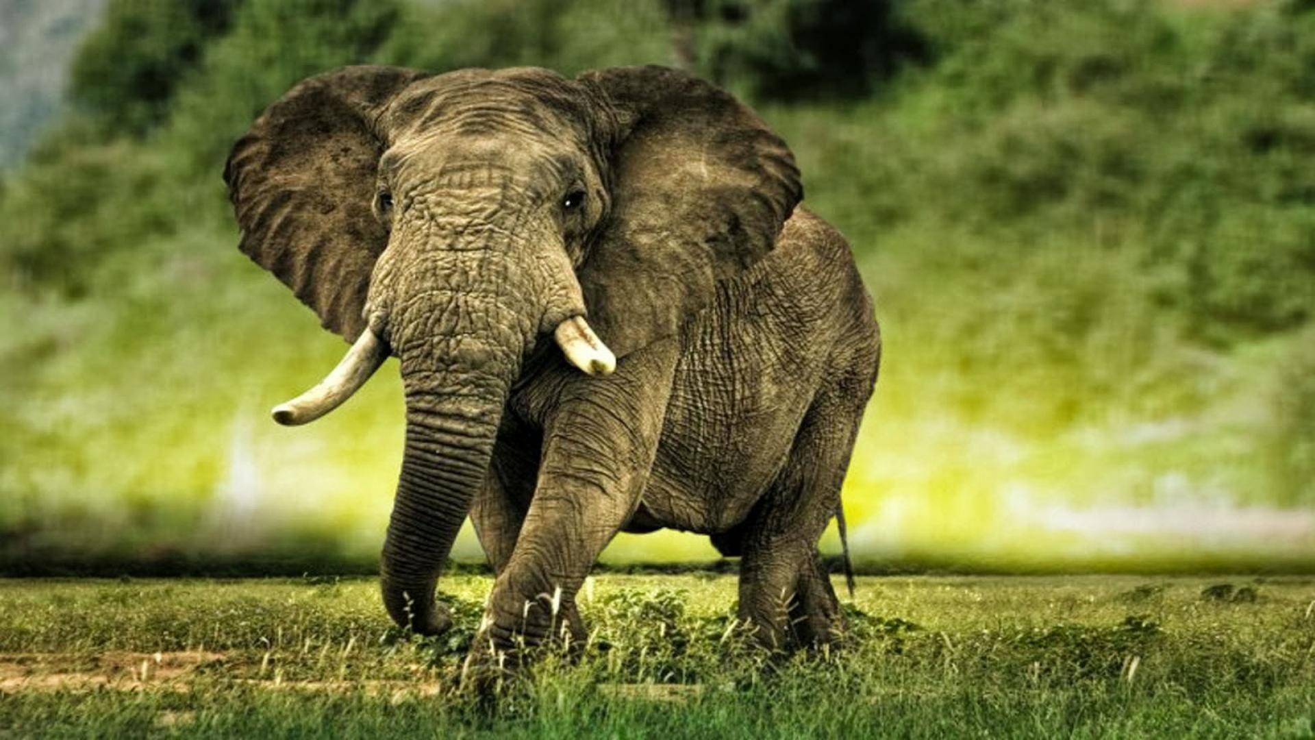 Elephant Beautiful Photo