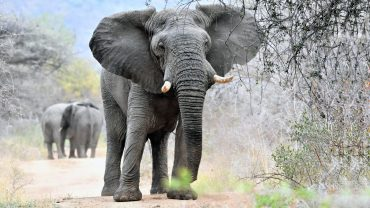 Elephant Family Photo