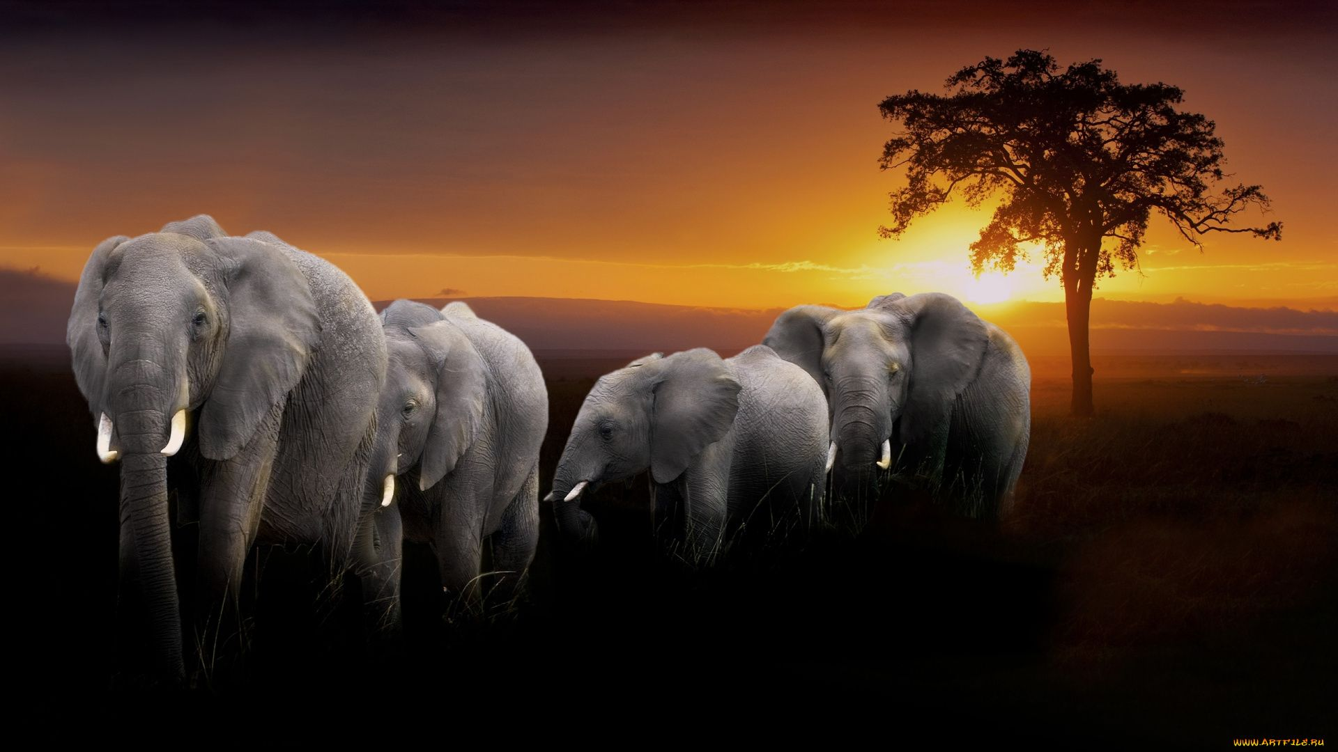 Elephant Pictures Africa Sunset