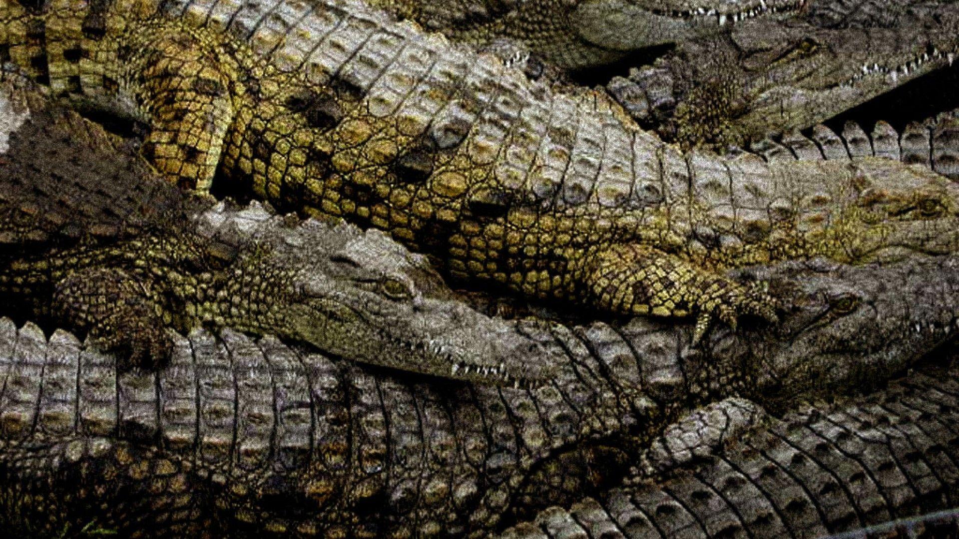 Exotic Animals Crocodile