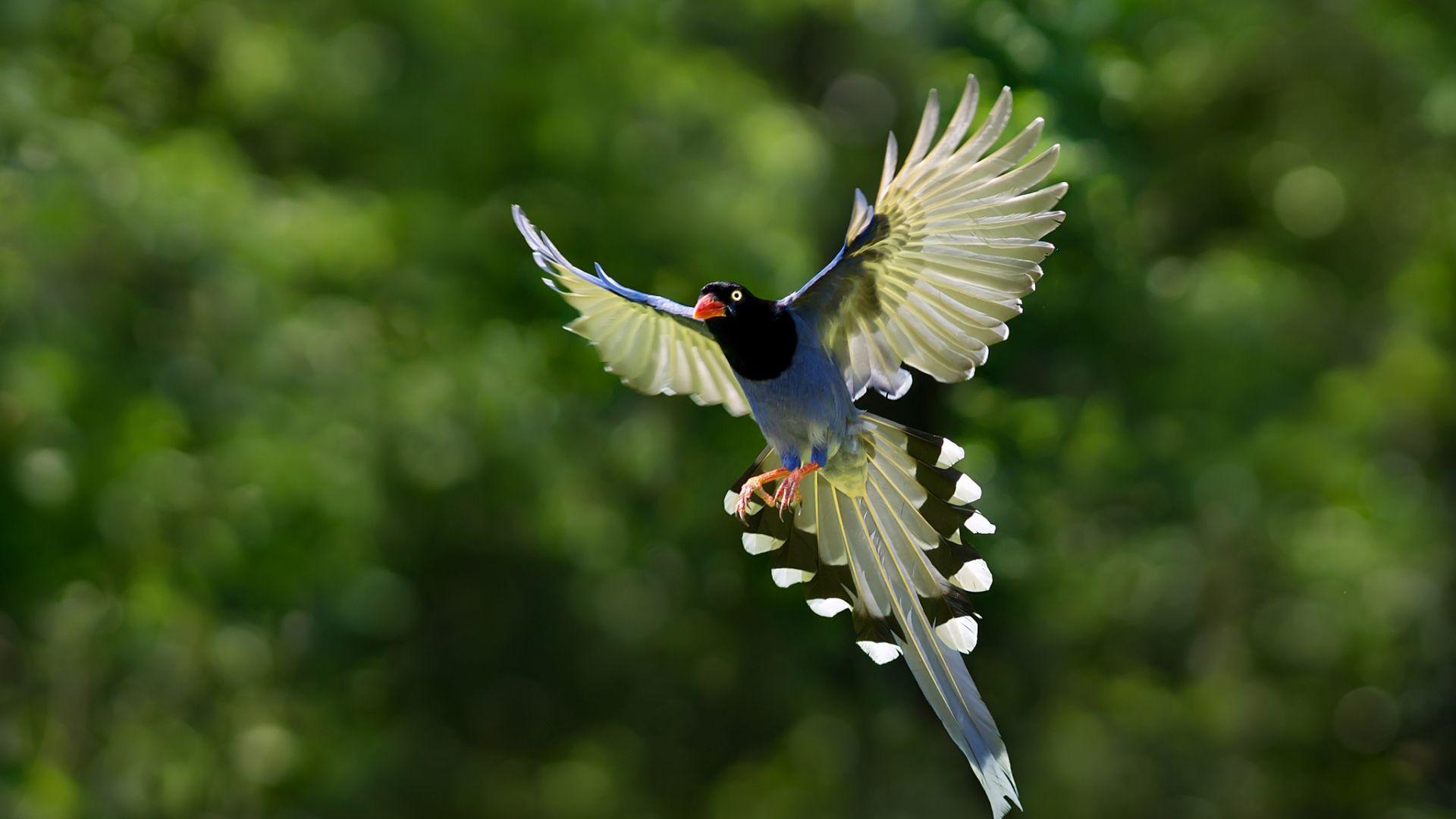 Exotic Birds In Flight