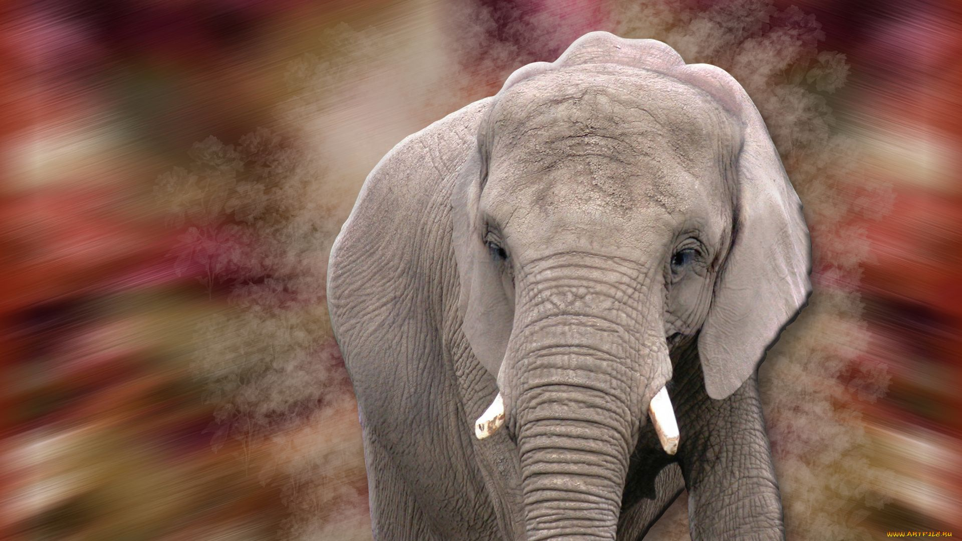 Face Elephant Photo