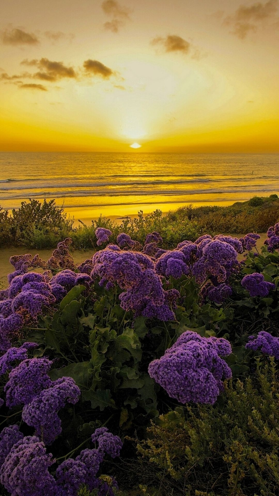Flowers At Dawn